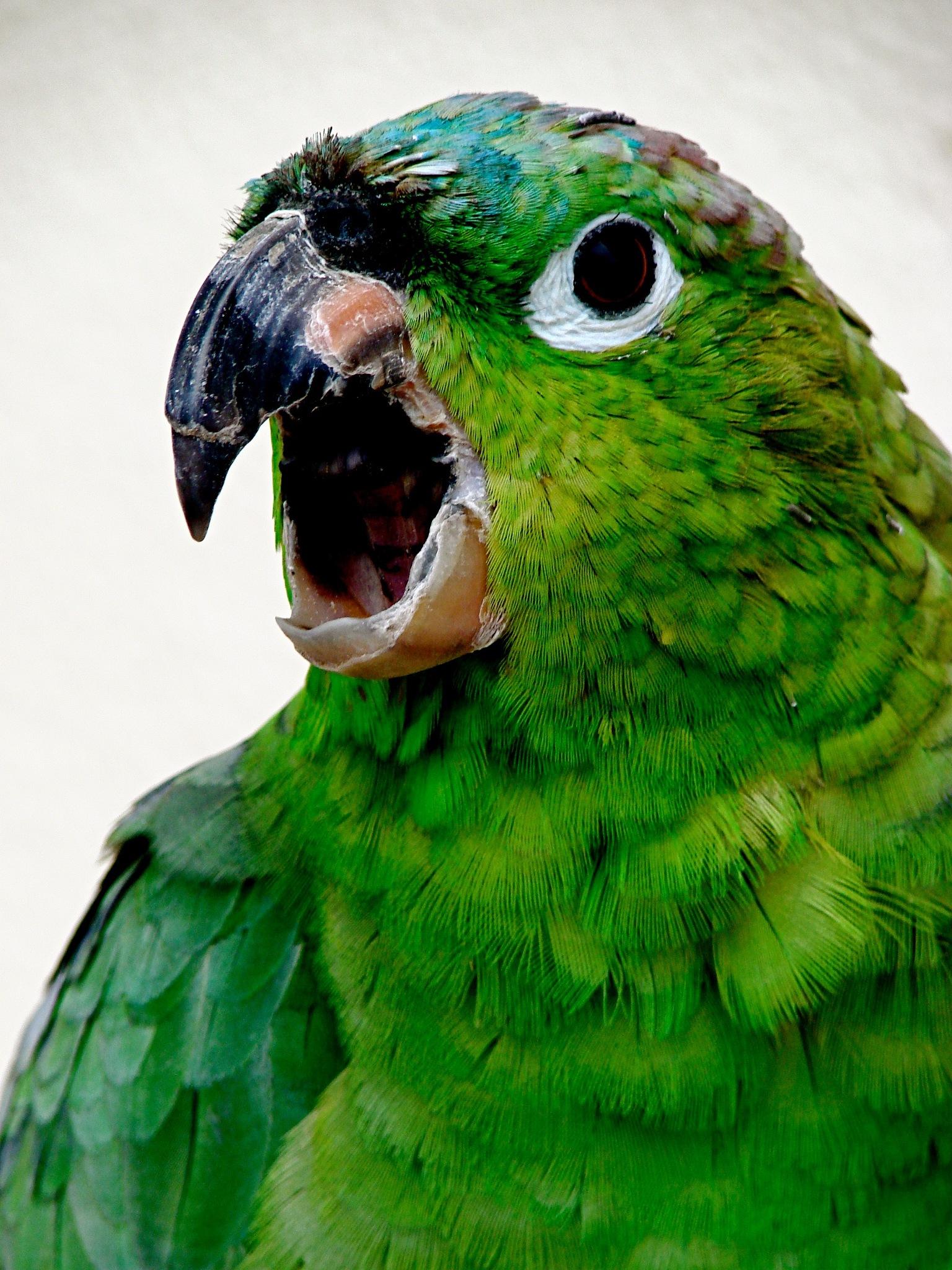Grrrrr ! by Geoff.McElwaine