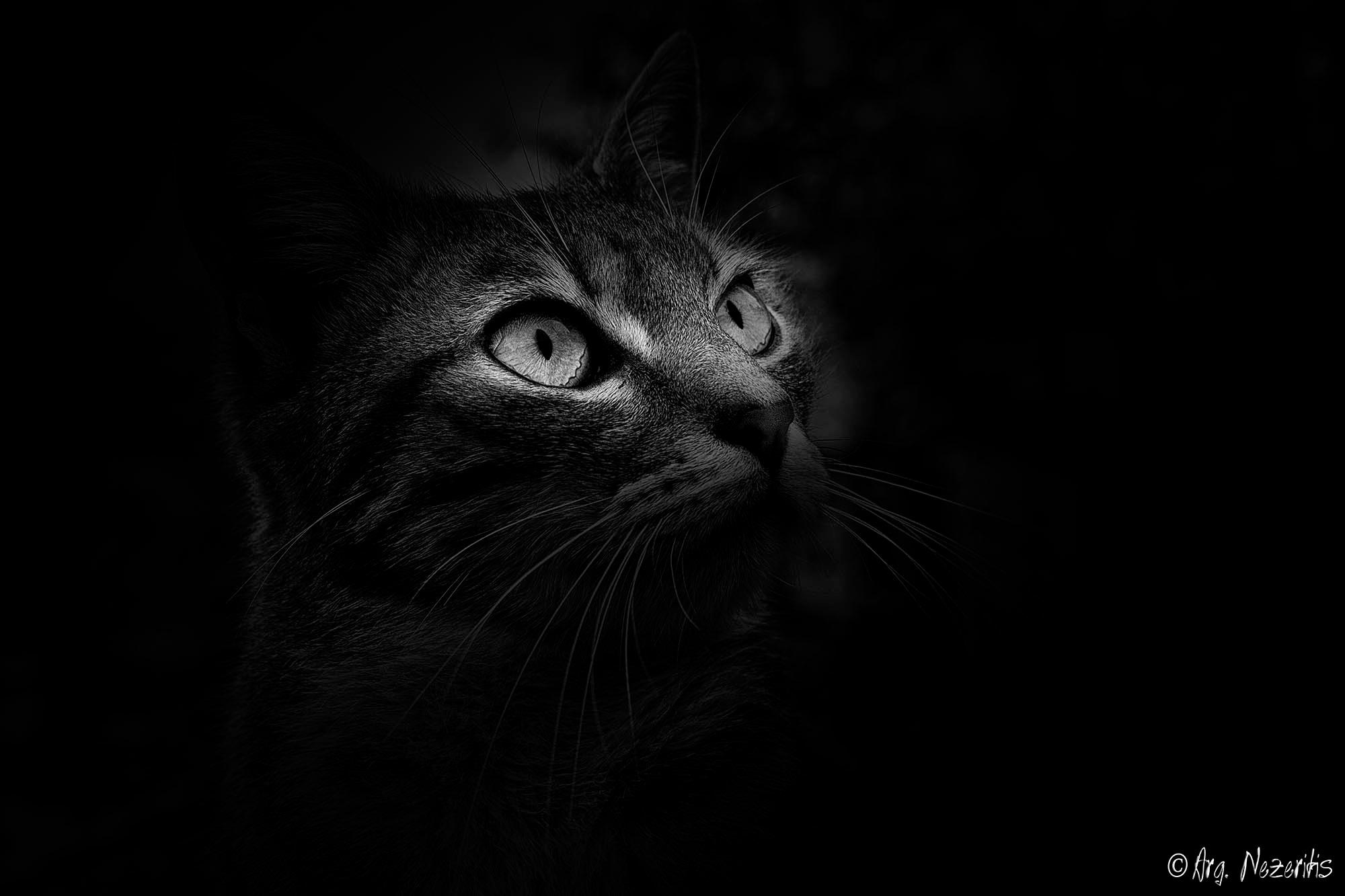 Cat's eyes by Argyris Nezeritis