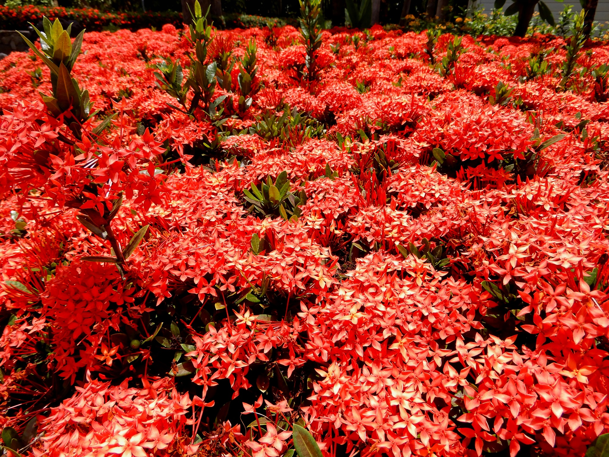 A lush red ocean  by Jackie06
