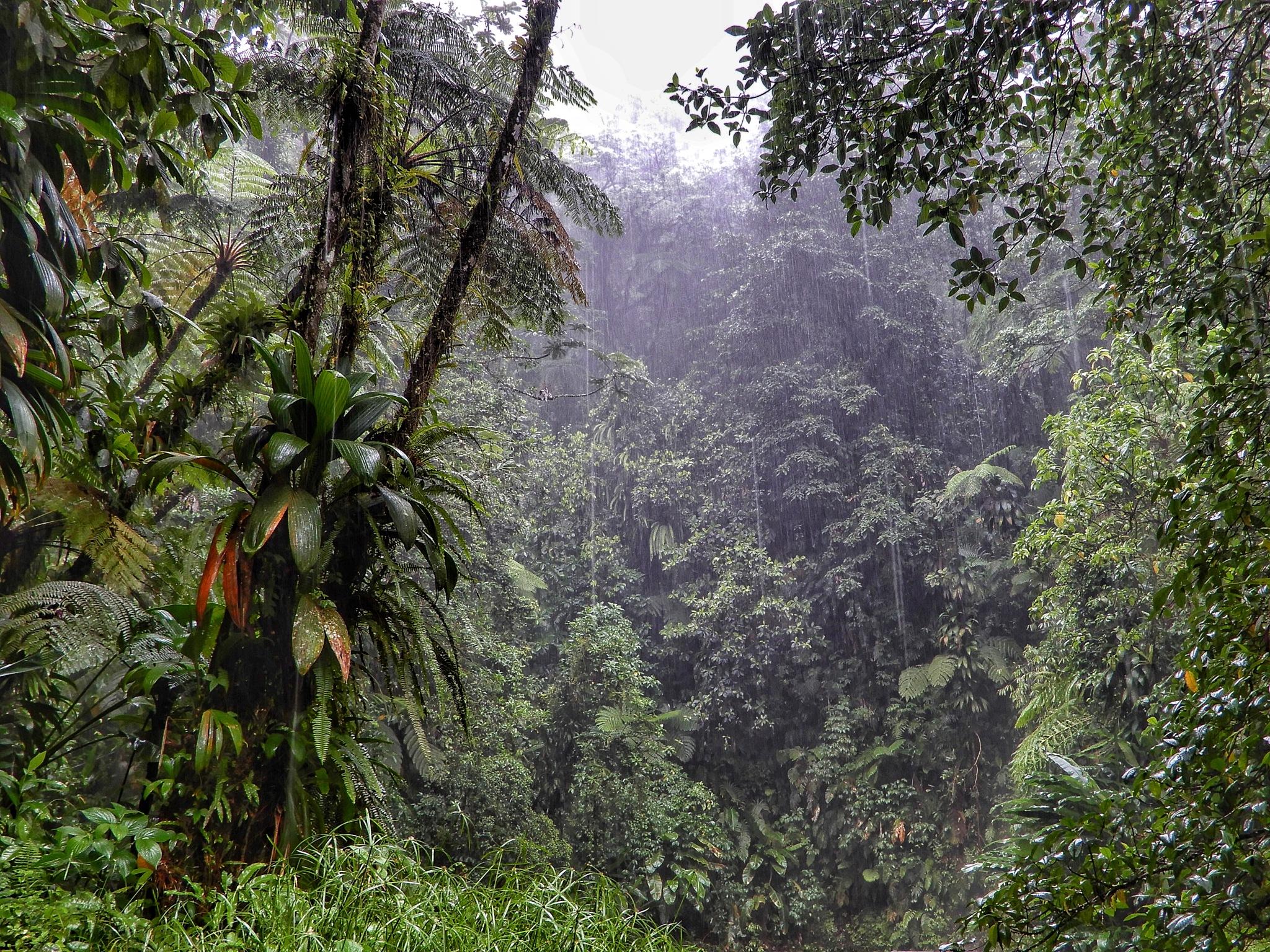 Tropical rain fall. by Jackie06