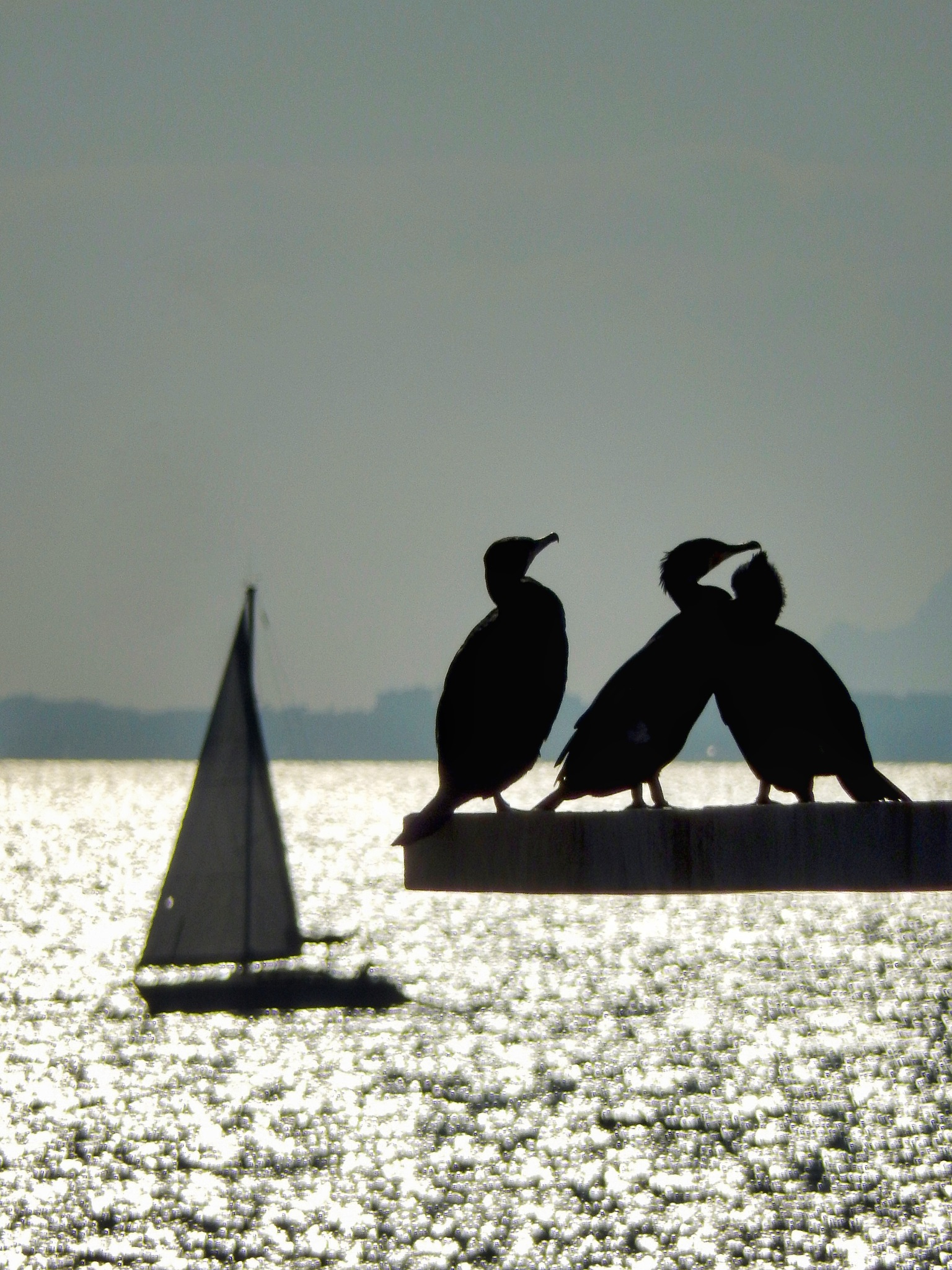 Cormorants on diving board... by Jackie06
