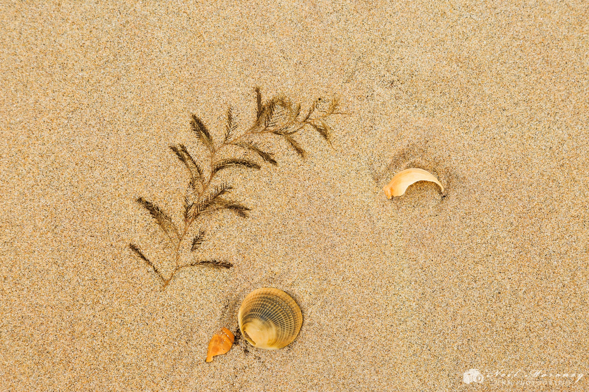Beach Art by Neil Moroney