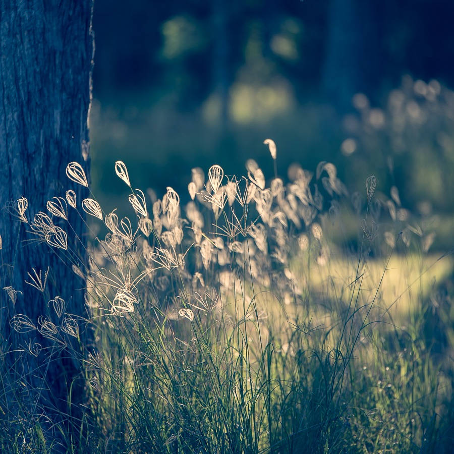Golden Grass by Dave Newcombe
