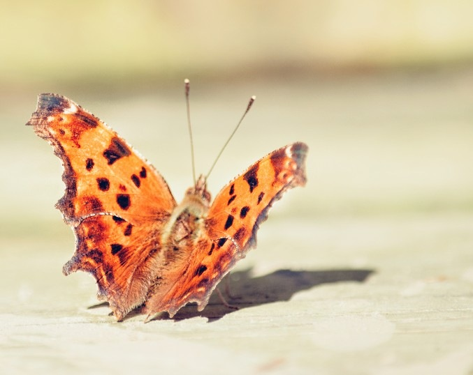 A Butterfly by Zoey Zips