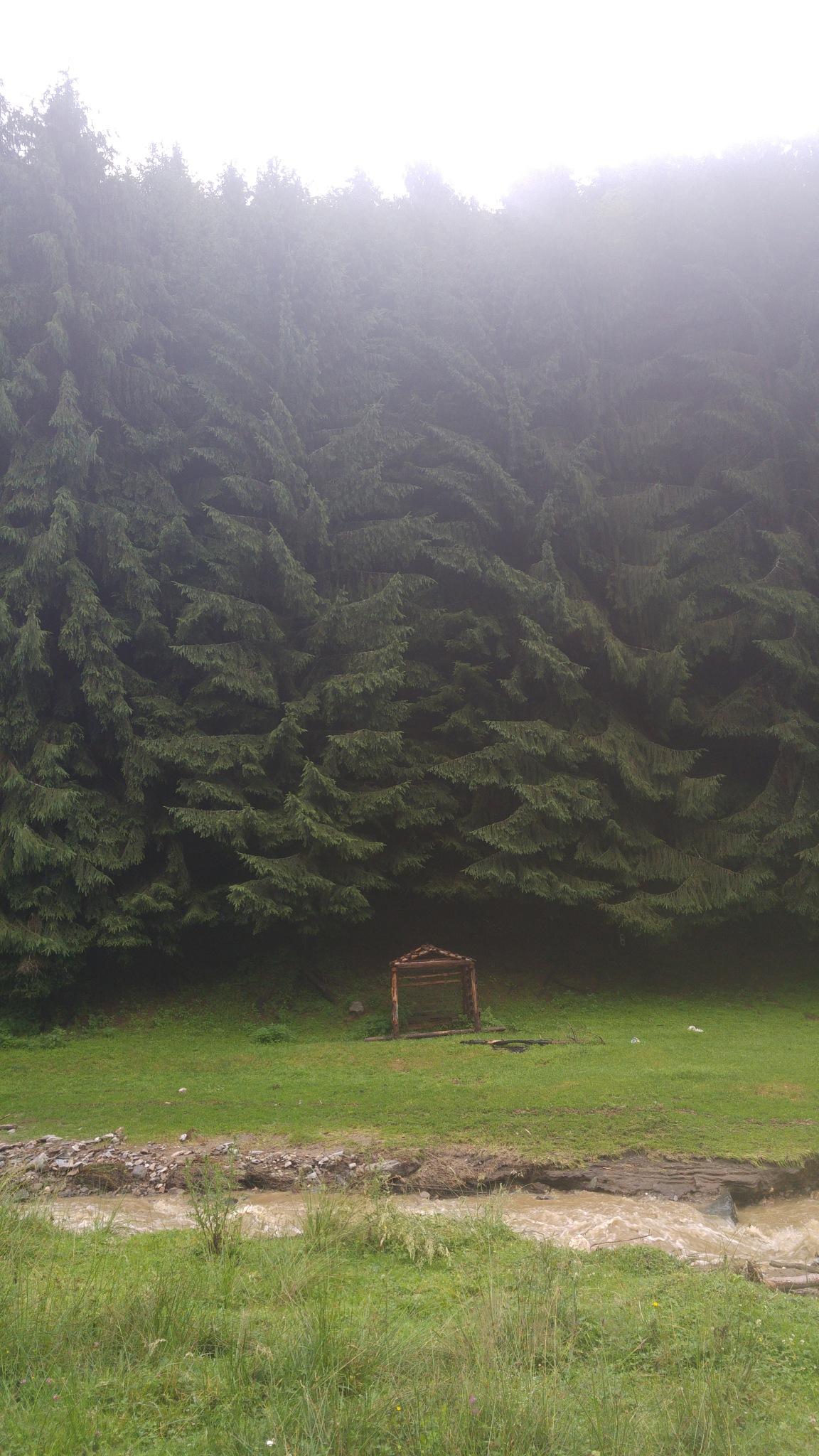 #hut #treee by George
