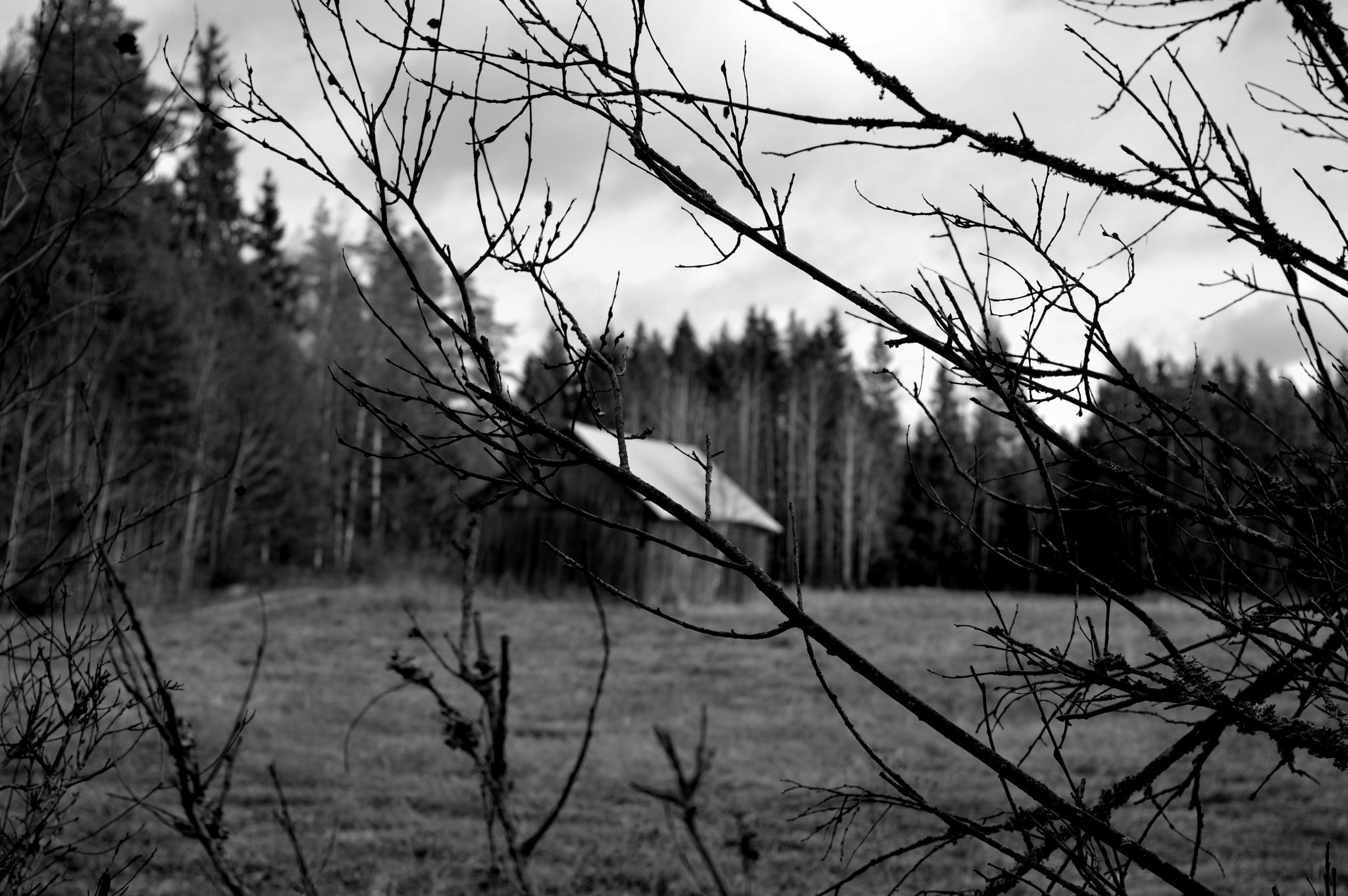 Project 1 by Viivi Kohonen