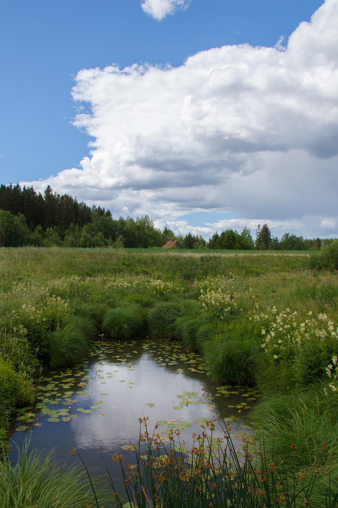 Countryside beauty by Viivi Kohonen