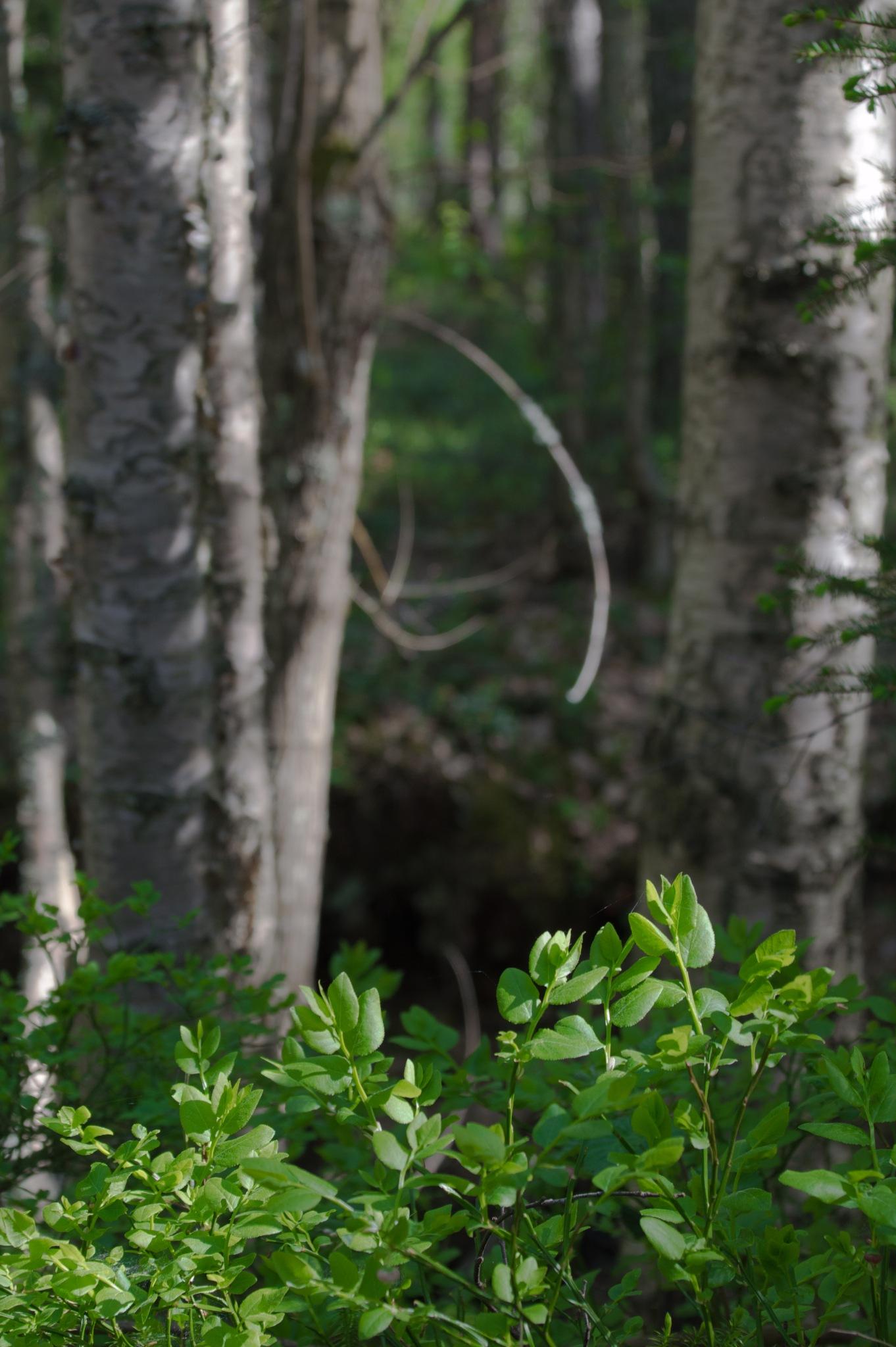 Trail by Viivi Kohonen