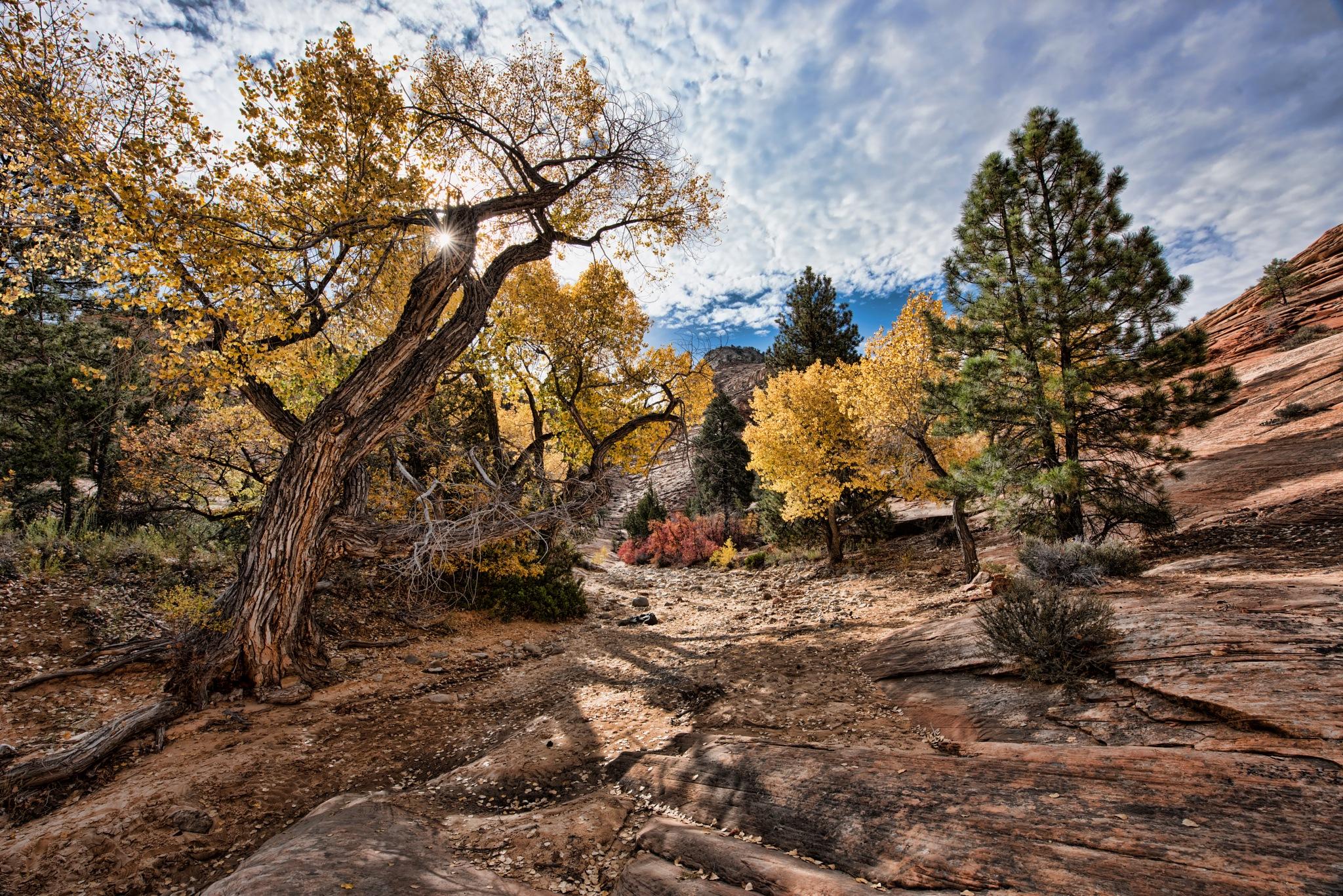 Checkered Mesa by ribyt