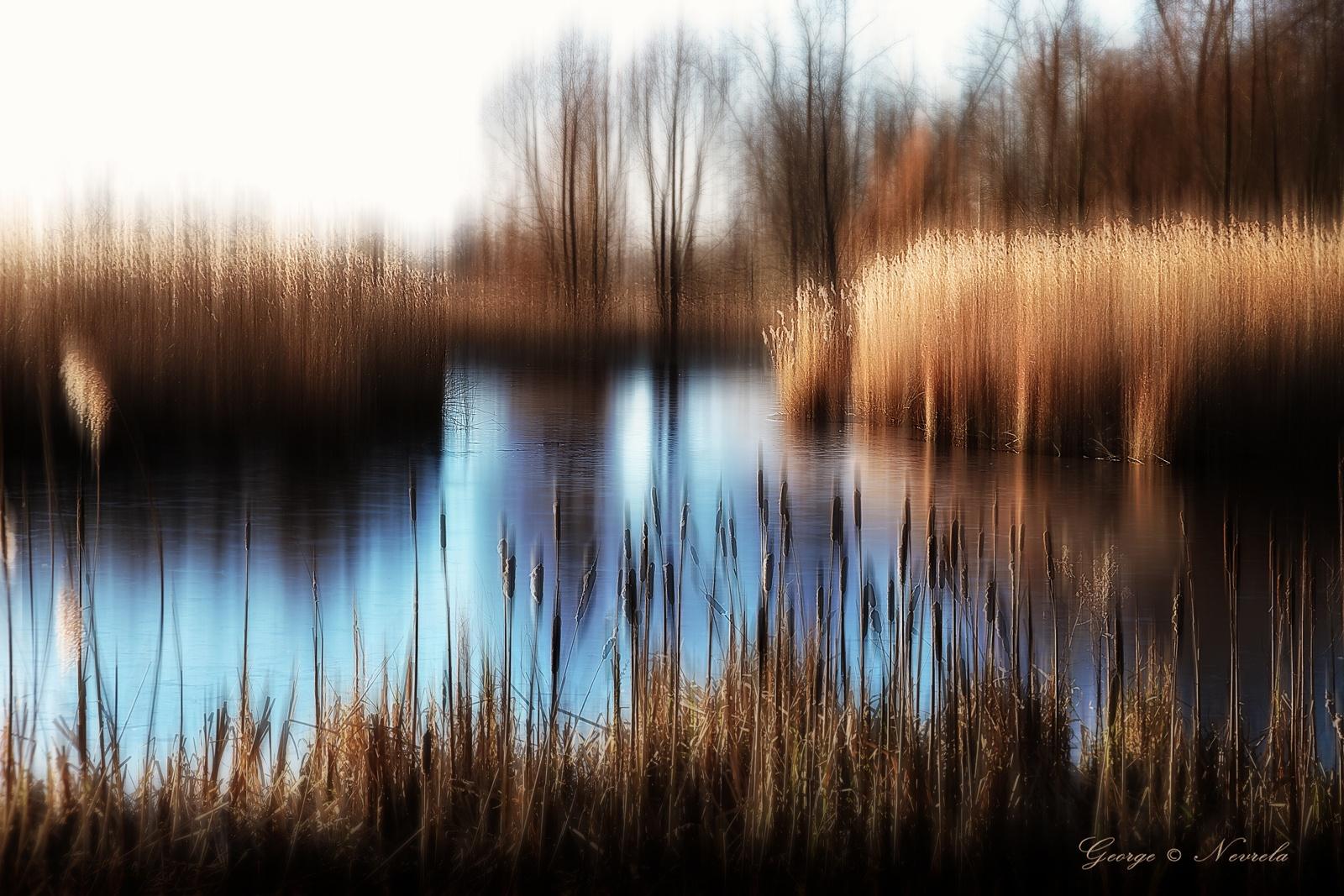 reed on lake by GeorgeNevrela