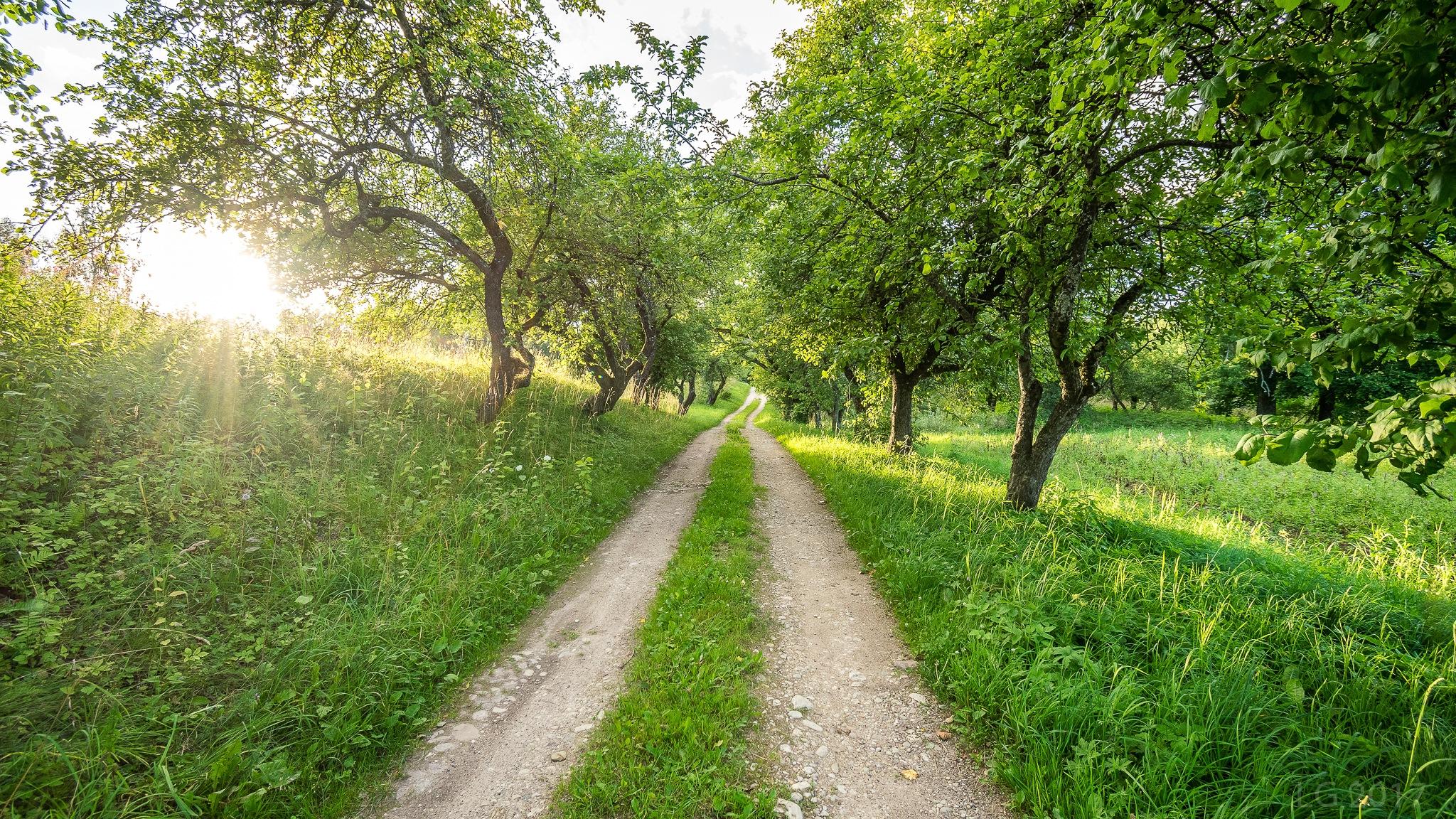 Path to Sunset by Linda Graholska