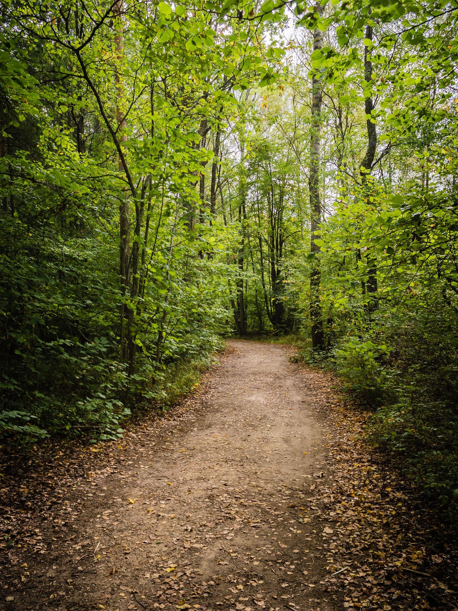Scary Pathway by Linda Graholska
