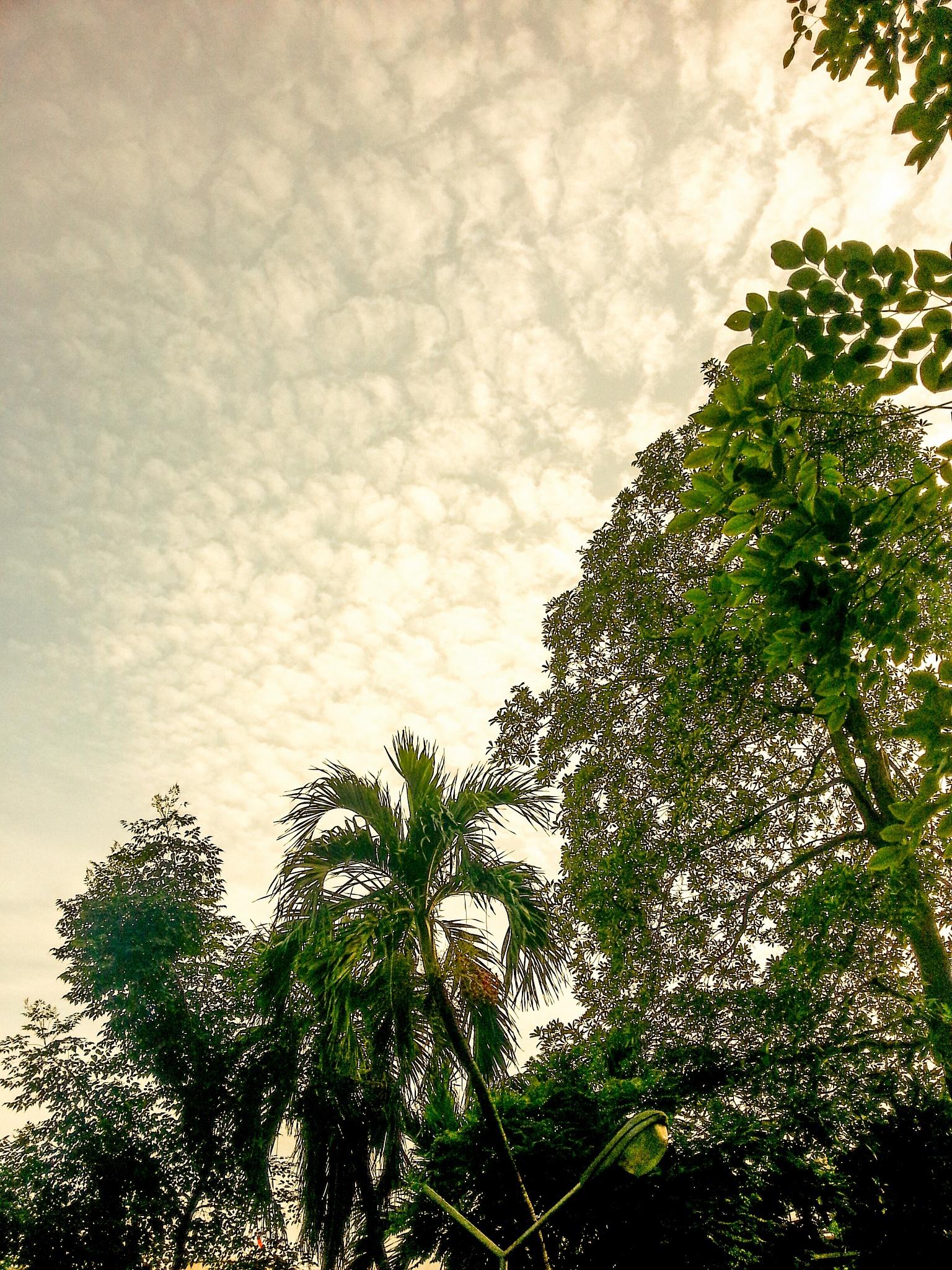 trees  by dangtrumpet