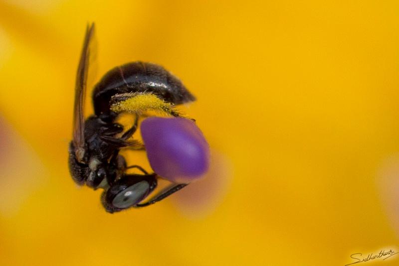 Photo in Macro #bee #bee on flower #water lili