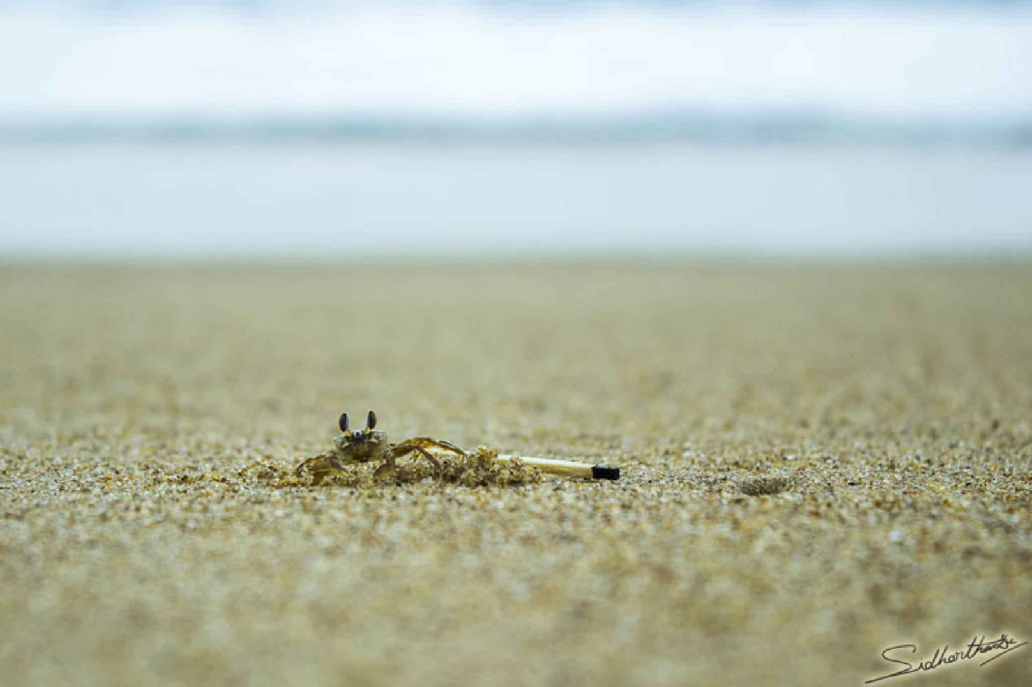 Photo in Random #tiny crab #crab on sand #crab with match stick #matchstick
