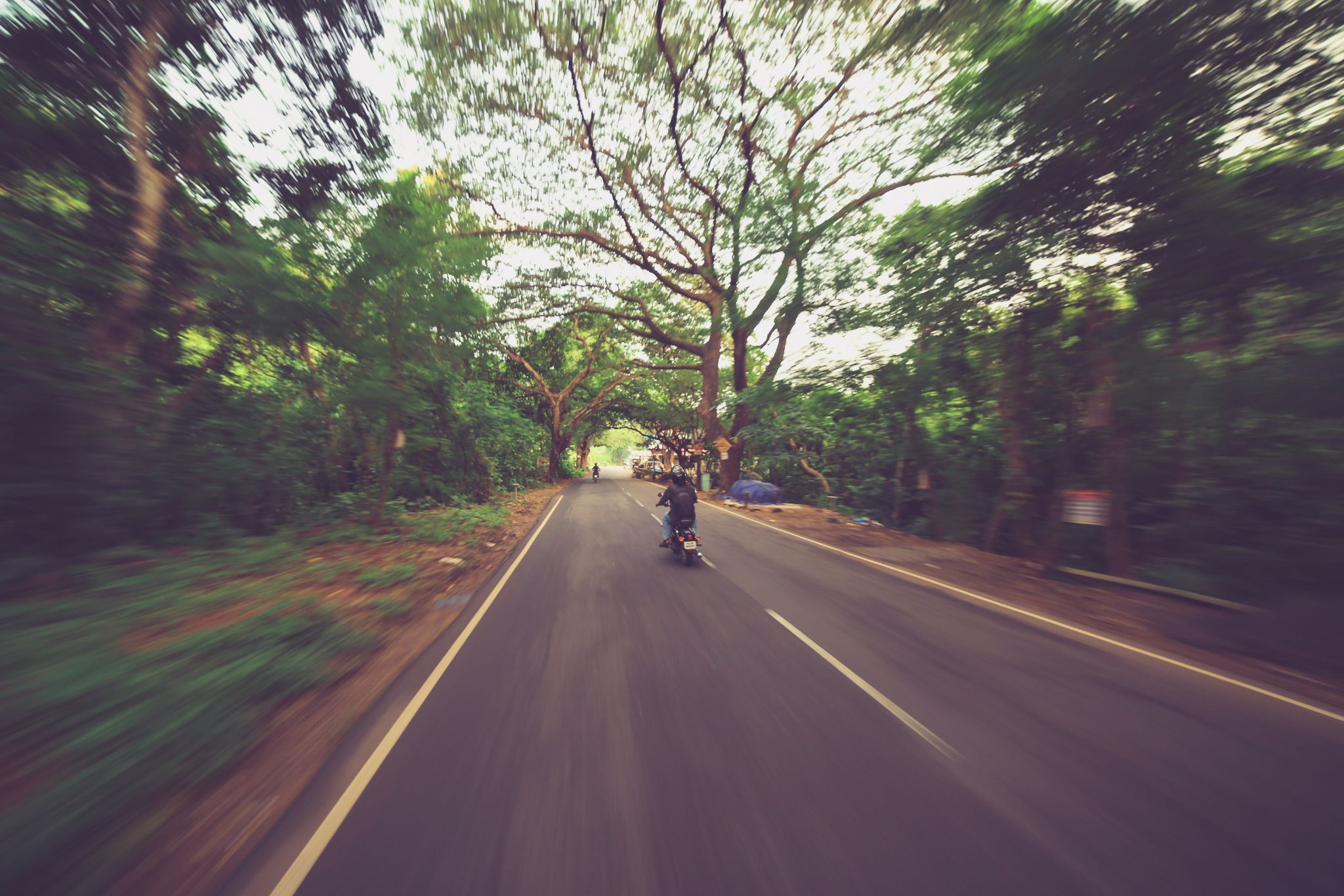 Cruising beneath the green lush by Jackson James