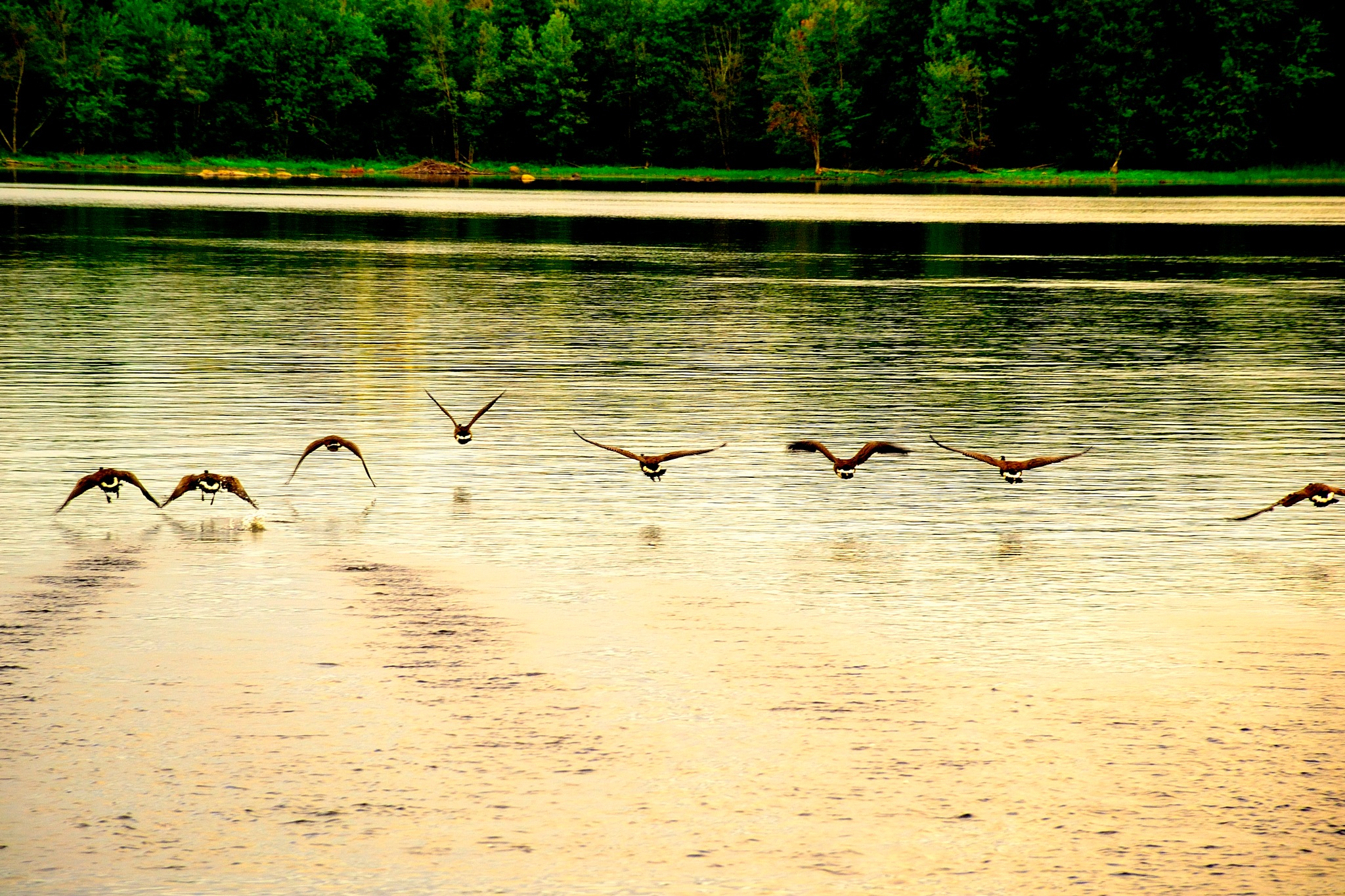 Flying Low by tamasergy