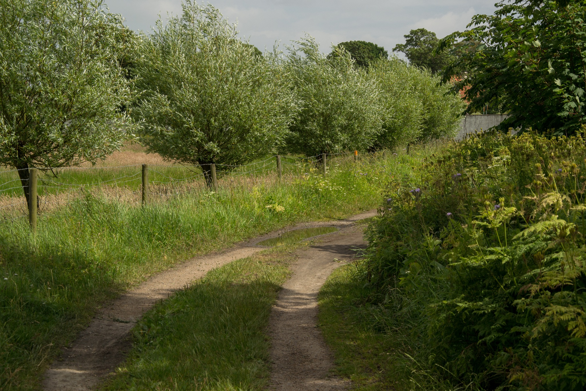 Country road by AnnelieConca