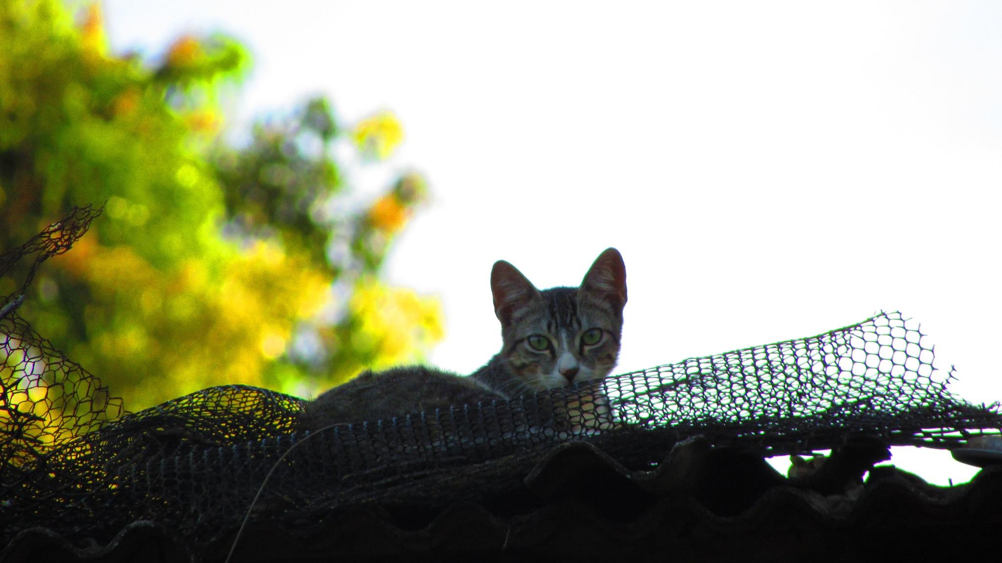 Cat by railanderguilherme