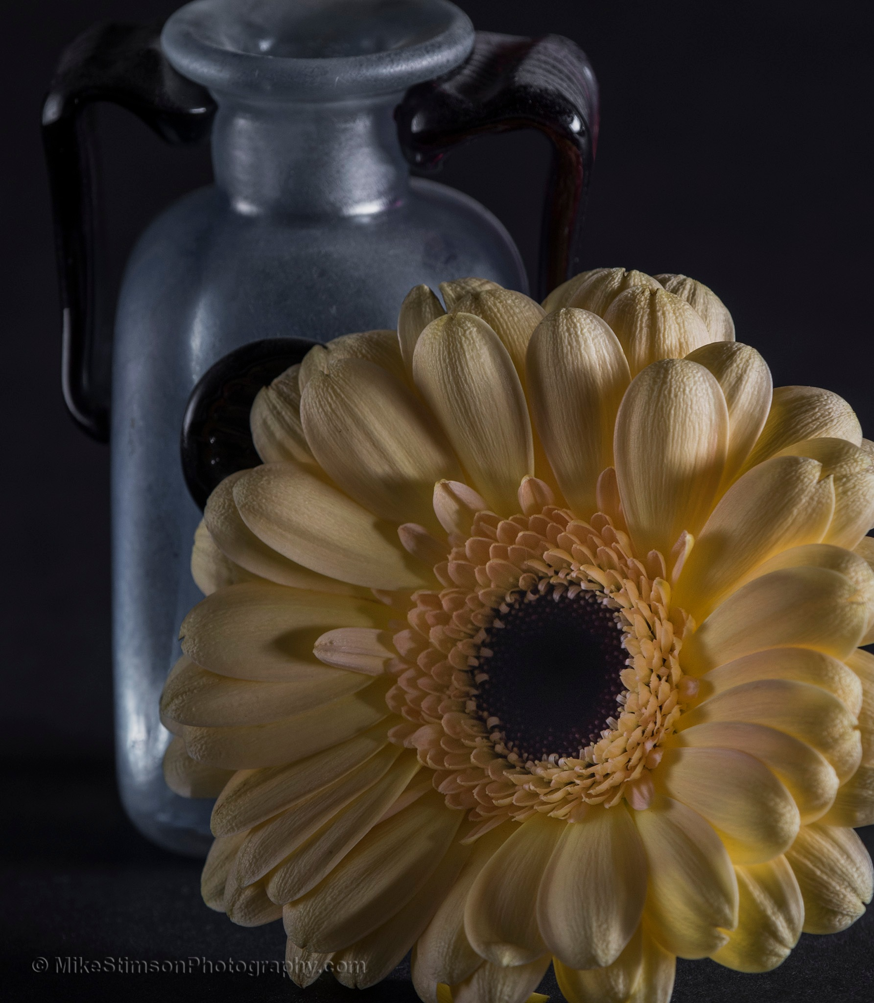 Yellow gerbera by Mike Stimson