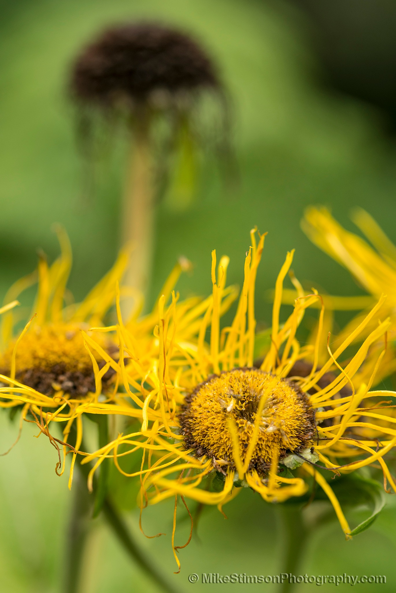 What are these flowers? by Mike Stimson
