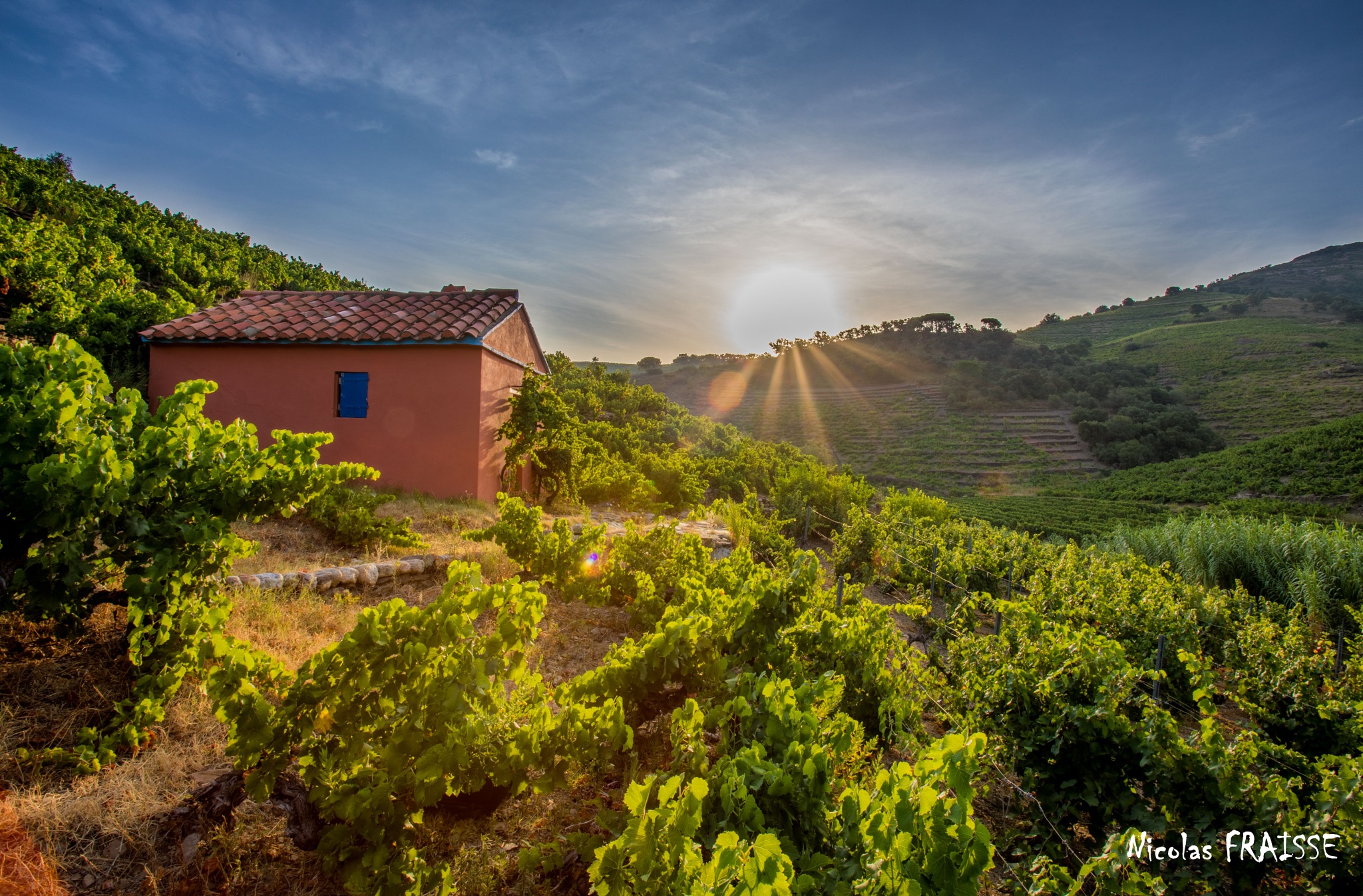 Sunrise in the wineyards of Collioure by Nicolas F.