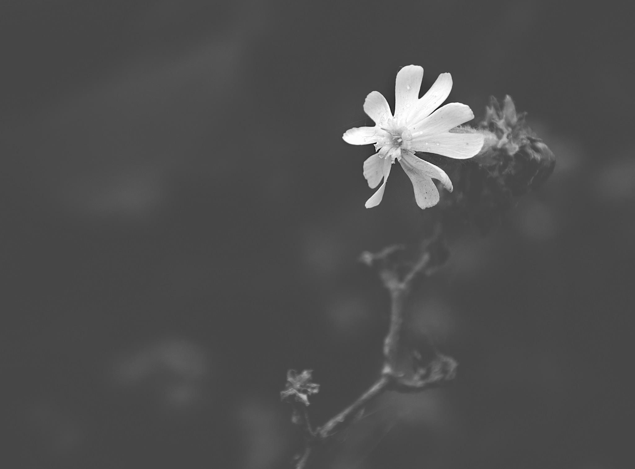 Tiny tiny tyny... by Chantalbellefeuille