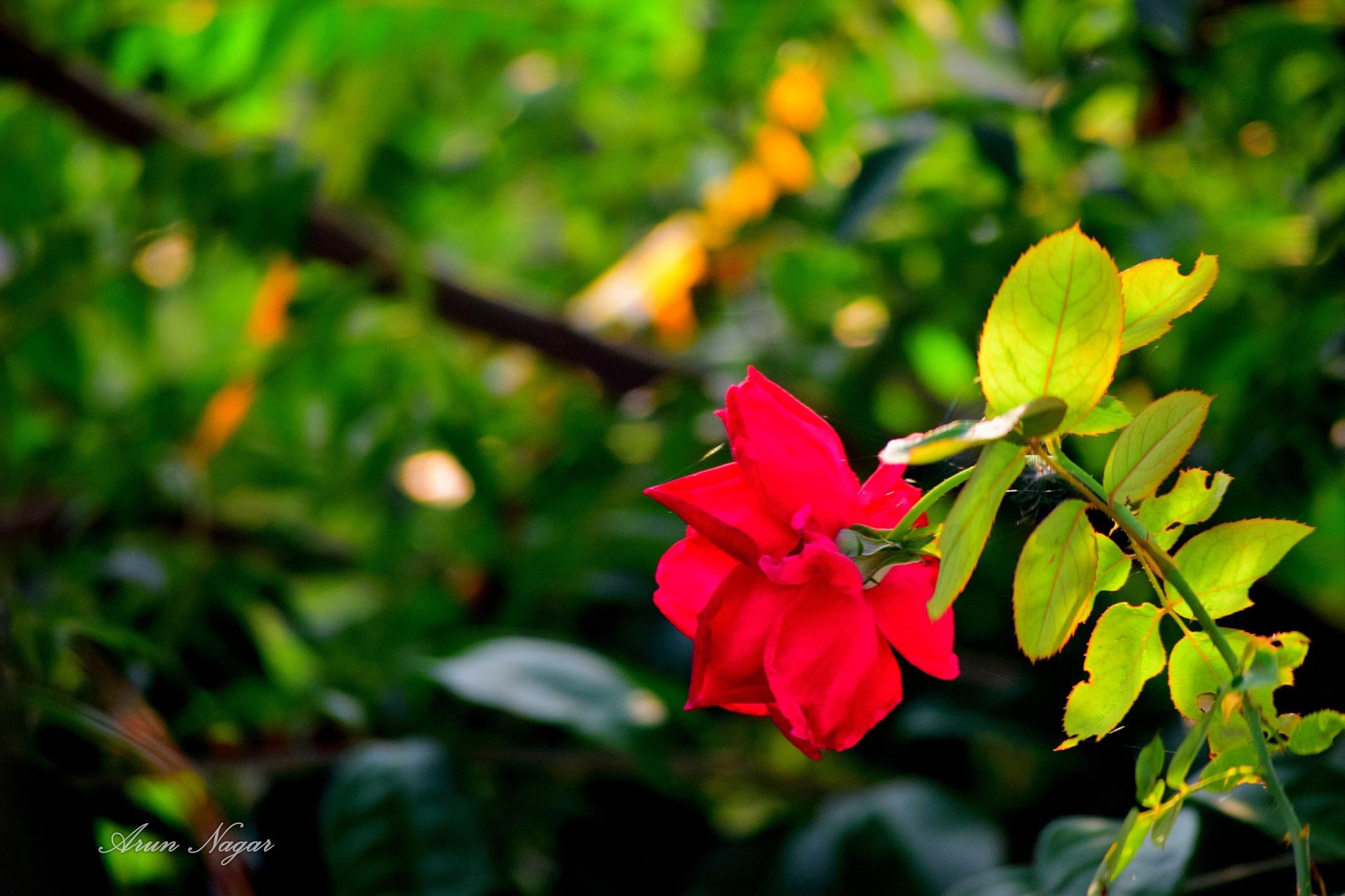 An Elegy by Arun Nagar