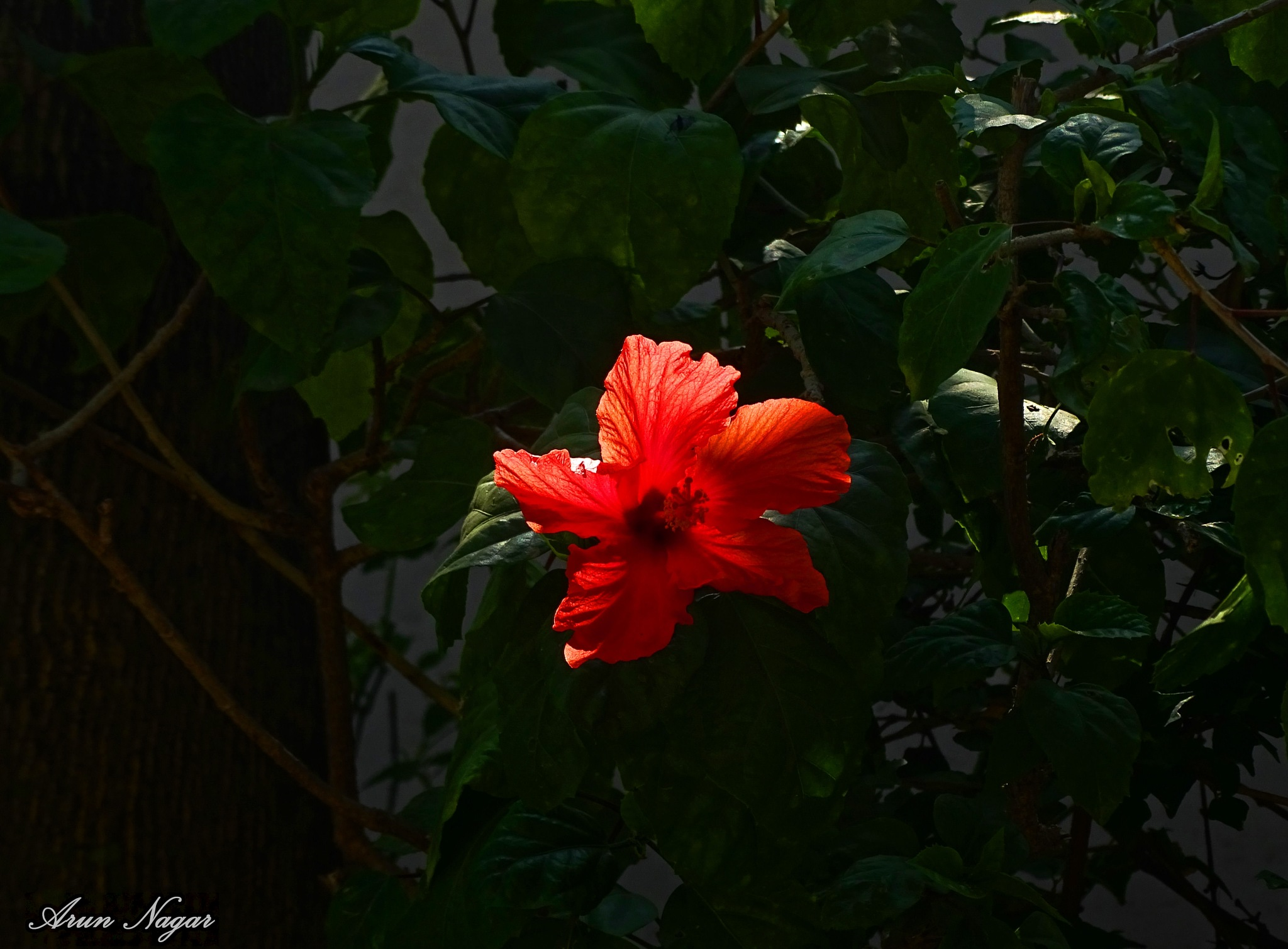 A Ray of New Hope by Arun Nagar
