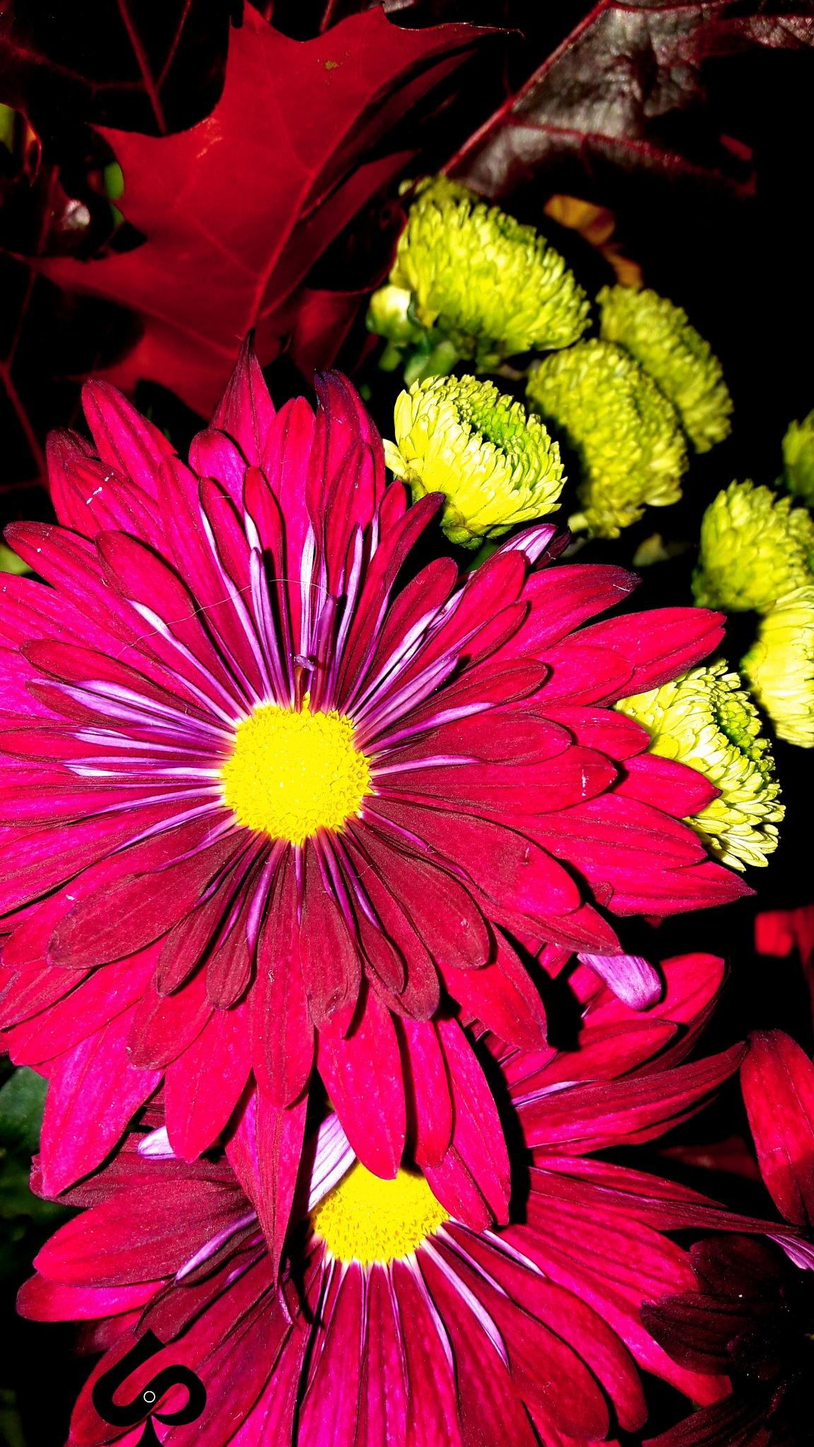 Red flower  by Isa Bel