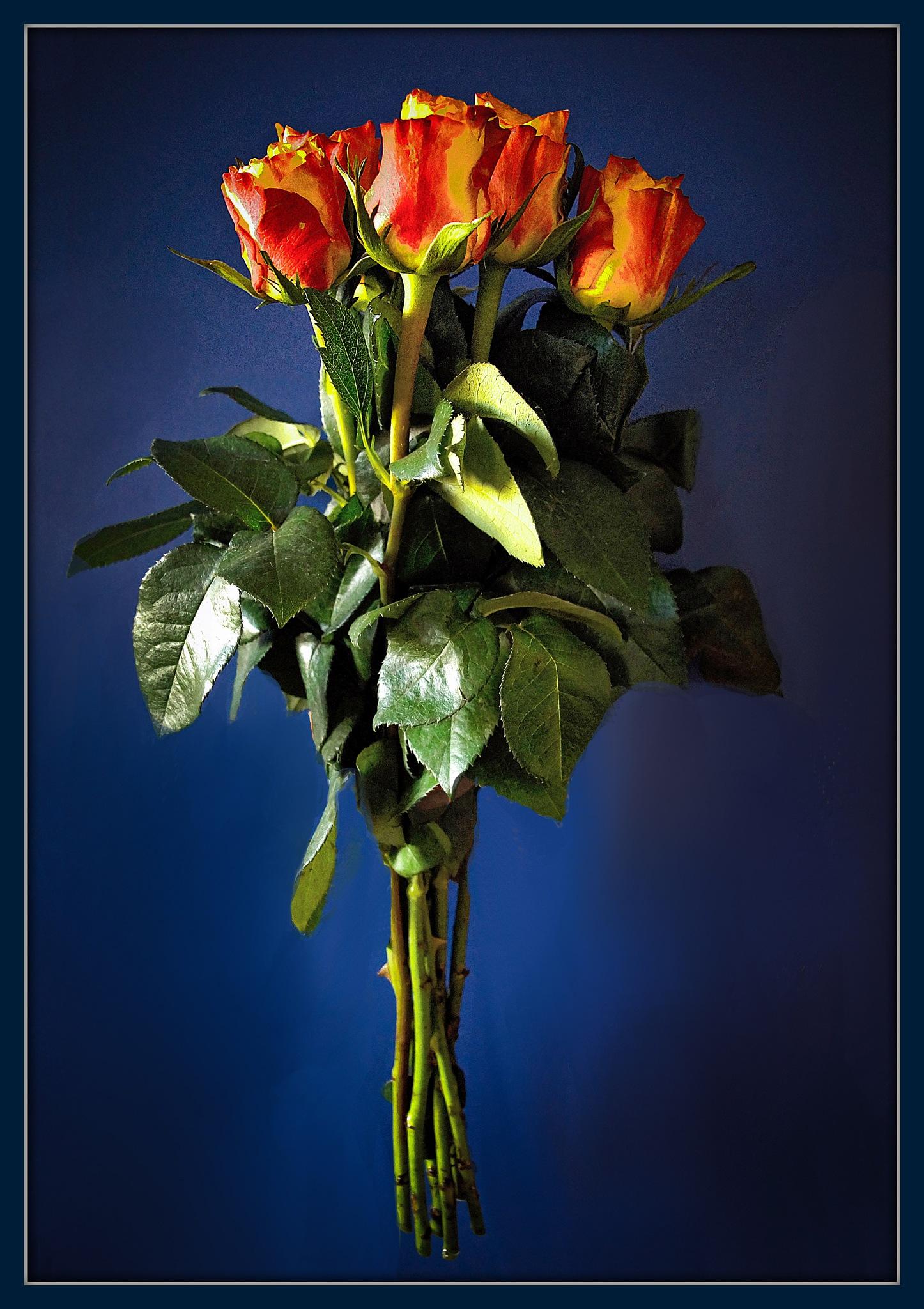 roses by darko1965