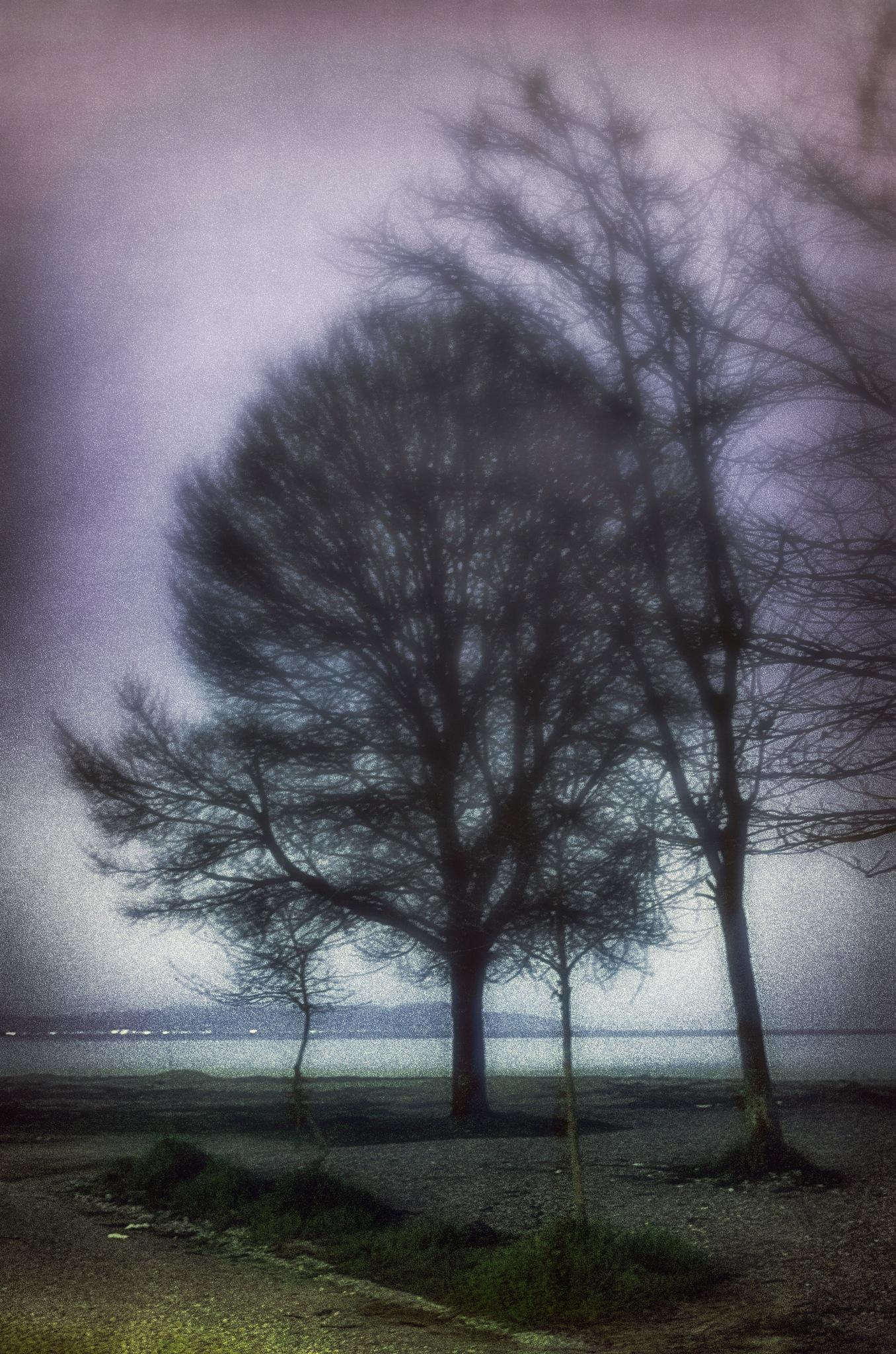 Tree in the mist by Stathis Karatzas