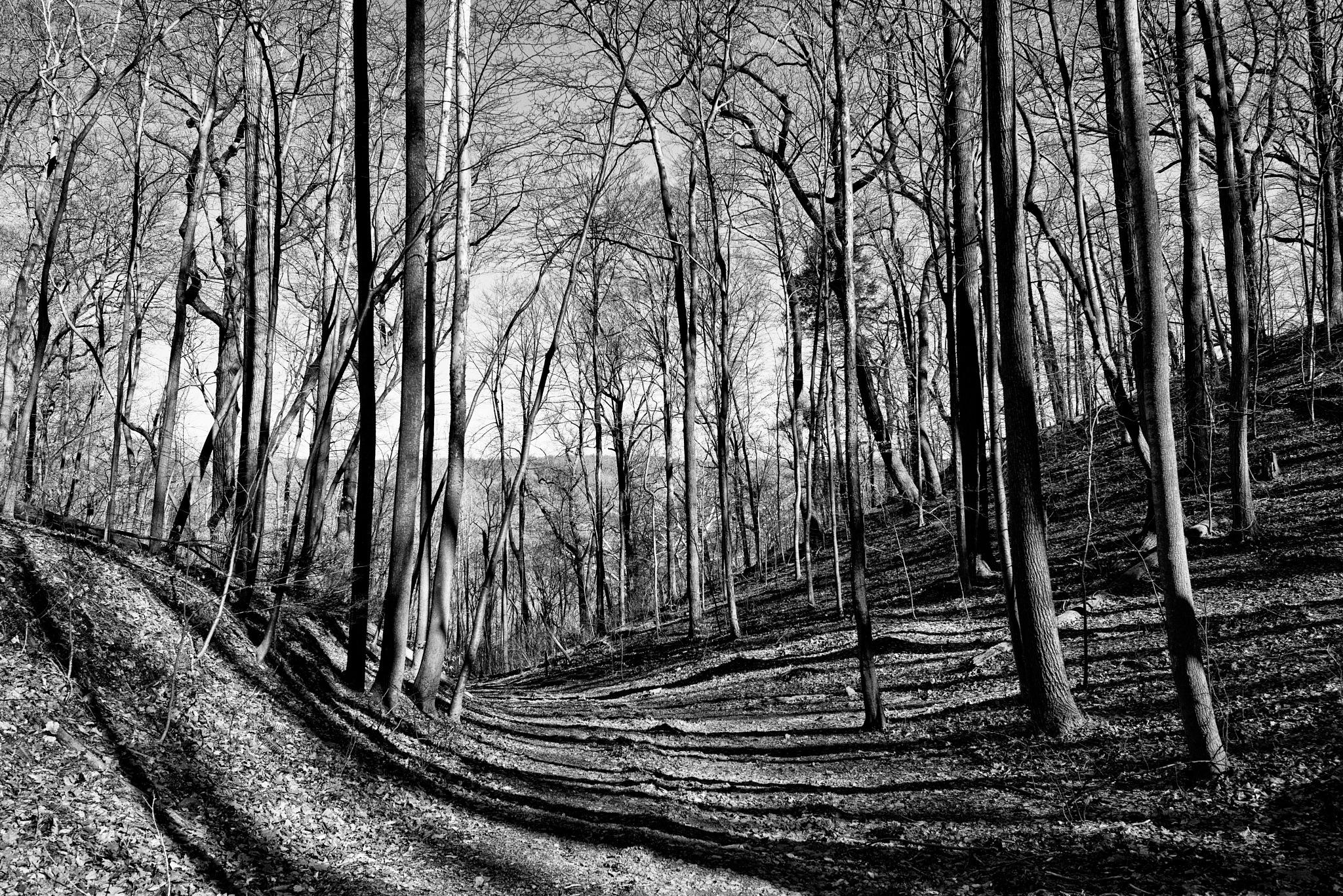 In the woods by FJWalker