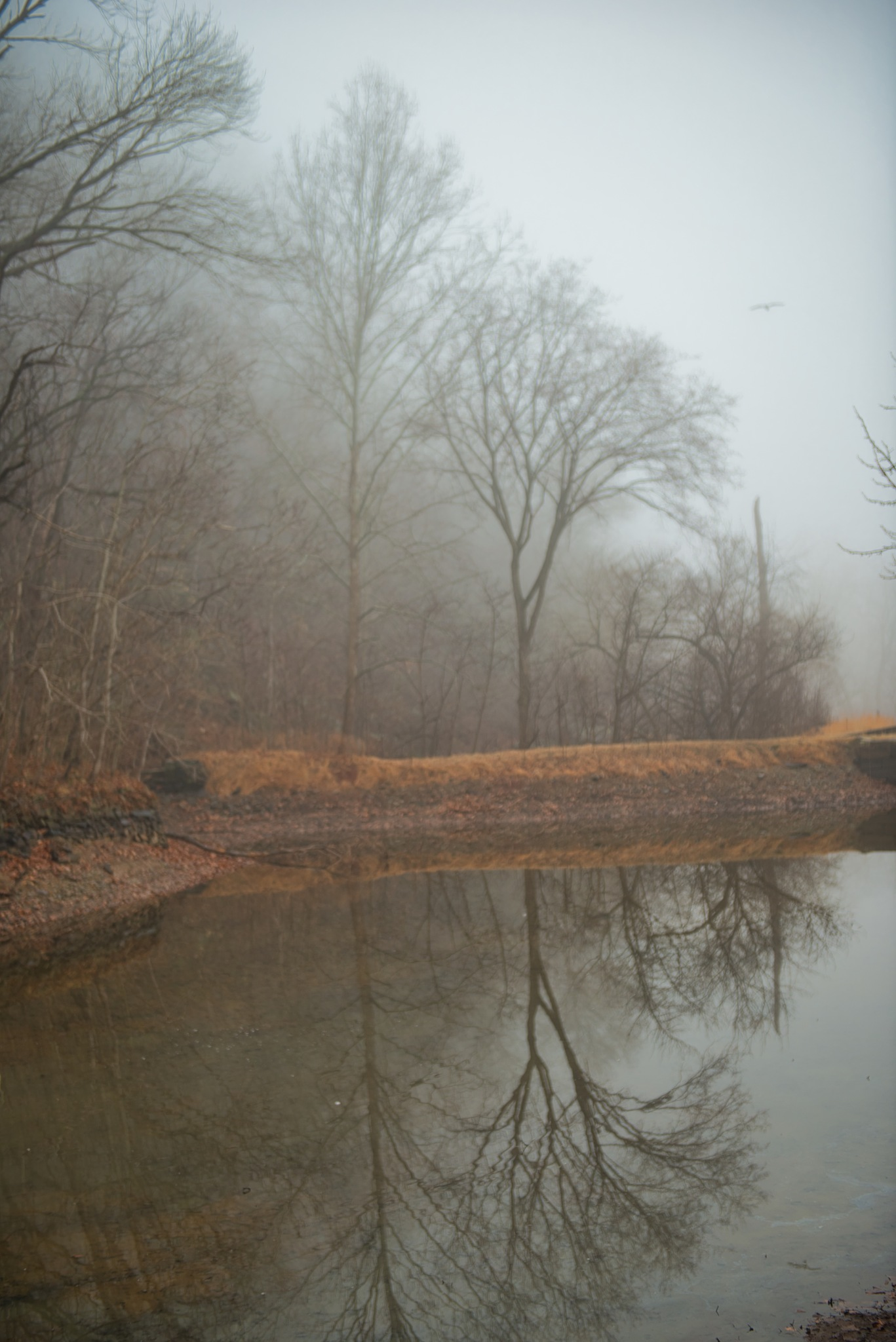 Foggy morning on the canal by FJWalker