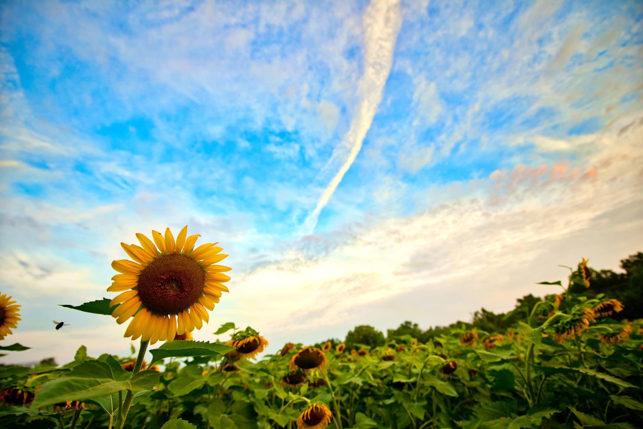 blooming by FJWalker