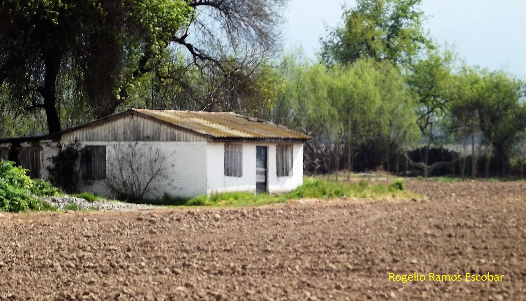 Mi casa blanca by Rogelio Ramos Escobar