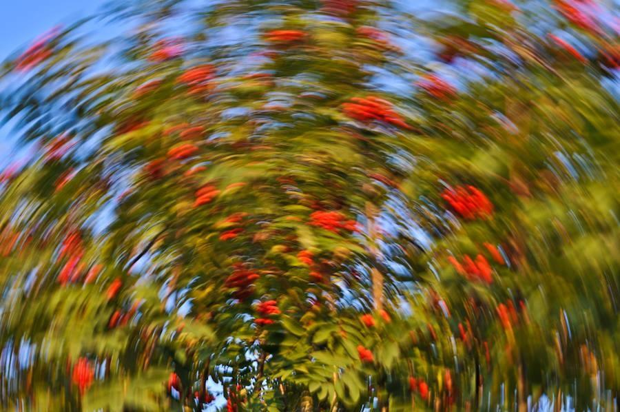 dizziness autumn colors by ausra