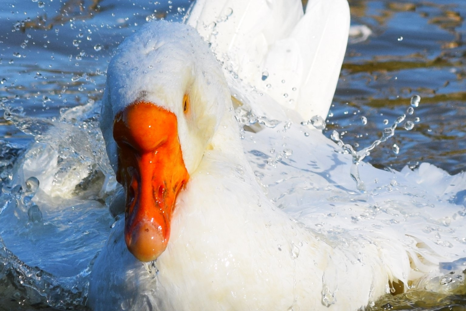 Goose by rsphotopassion