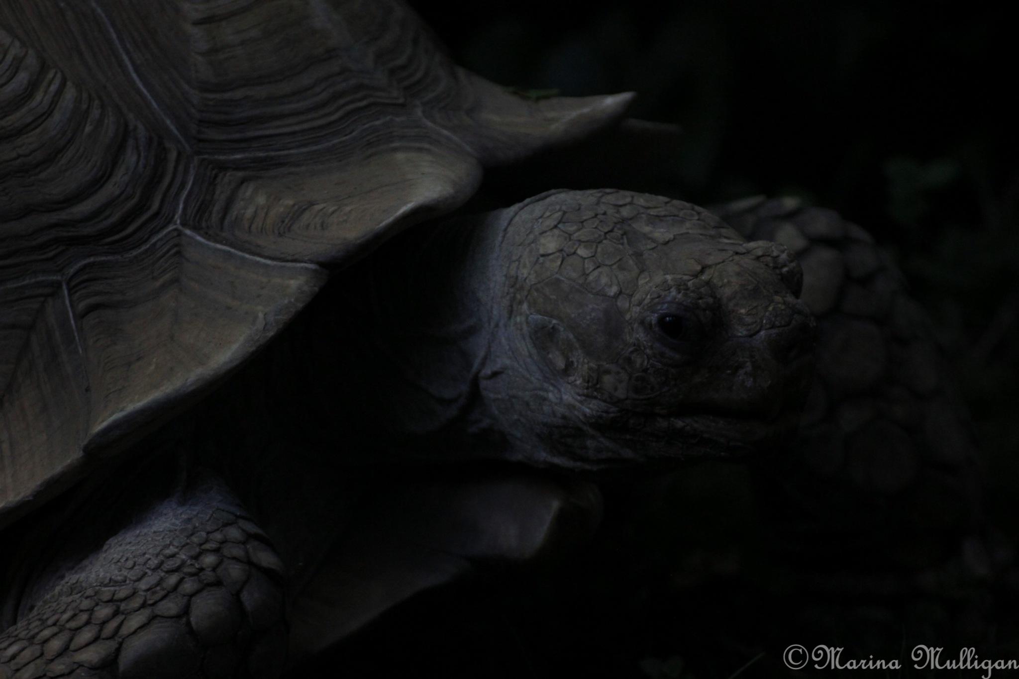 Tortoise by marina_m