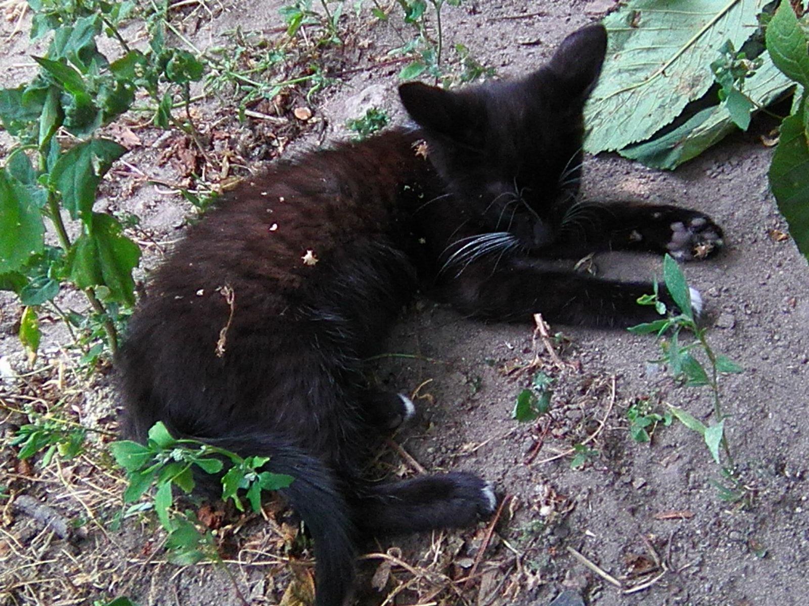 Bkack paw: Who disturb me? by Yulia2015