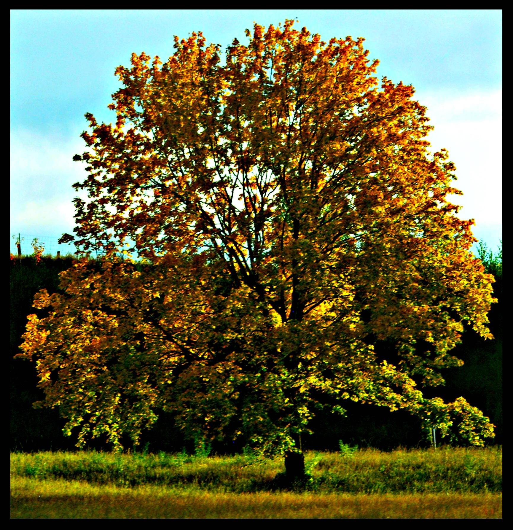 the tree by Marija Petrovic