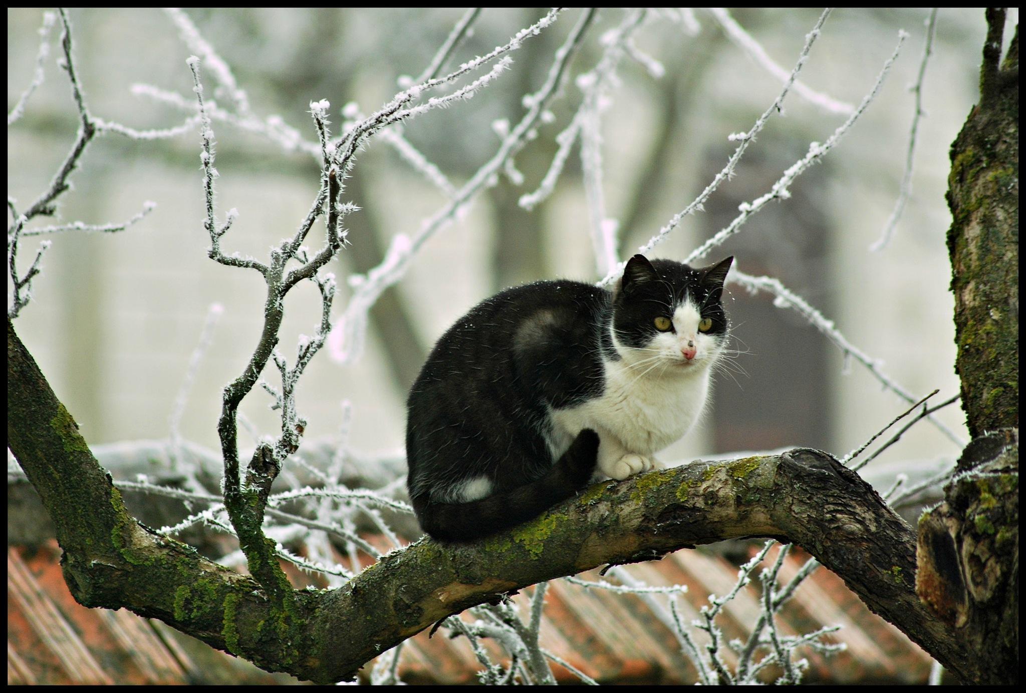 Frozen.. by Marija Petrovic