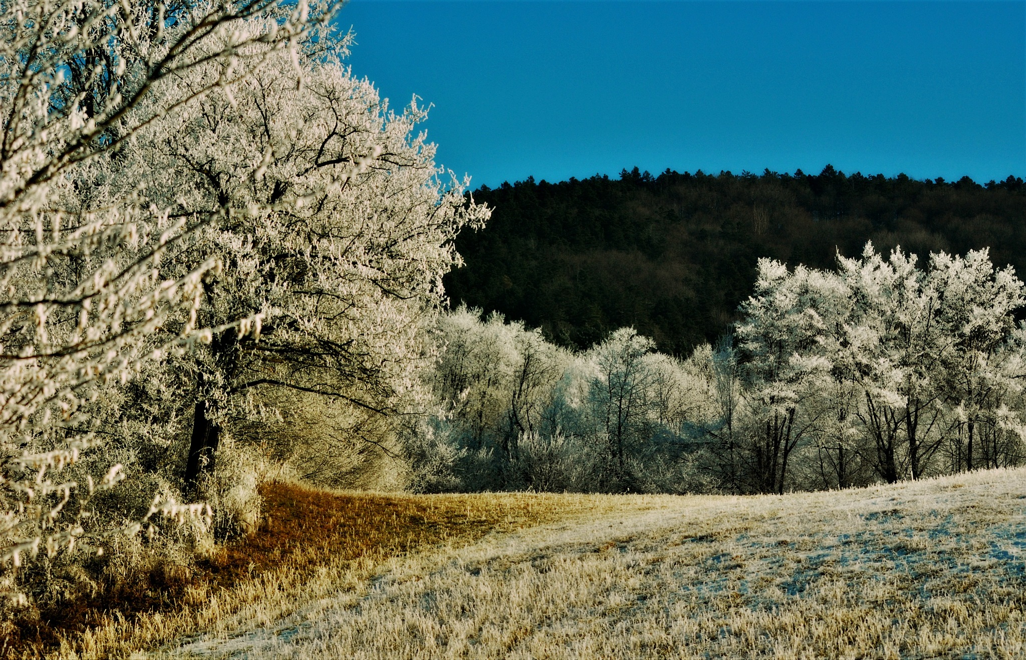 winter colors by Marija Petrovic