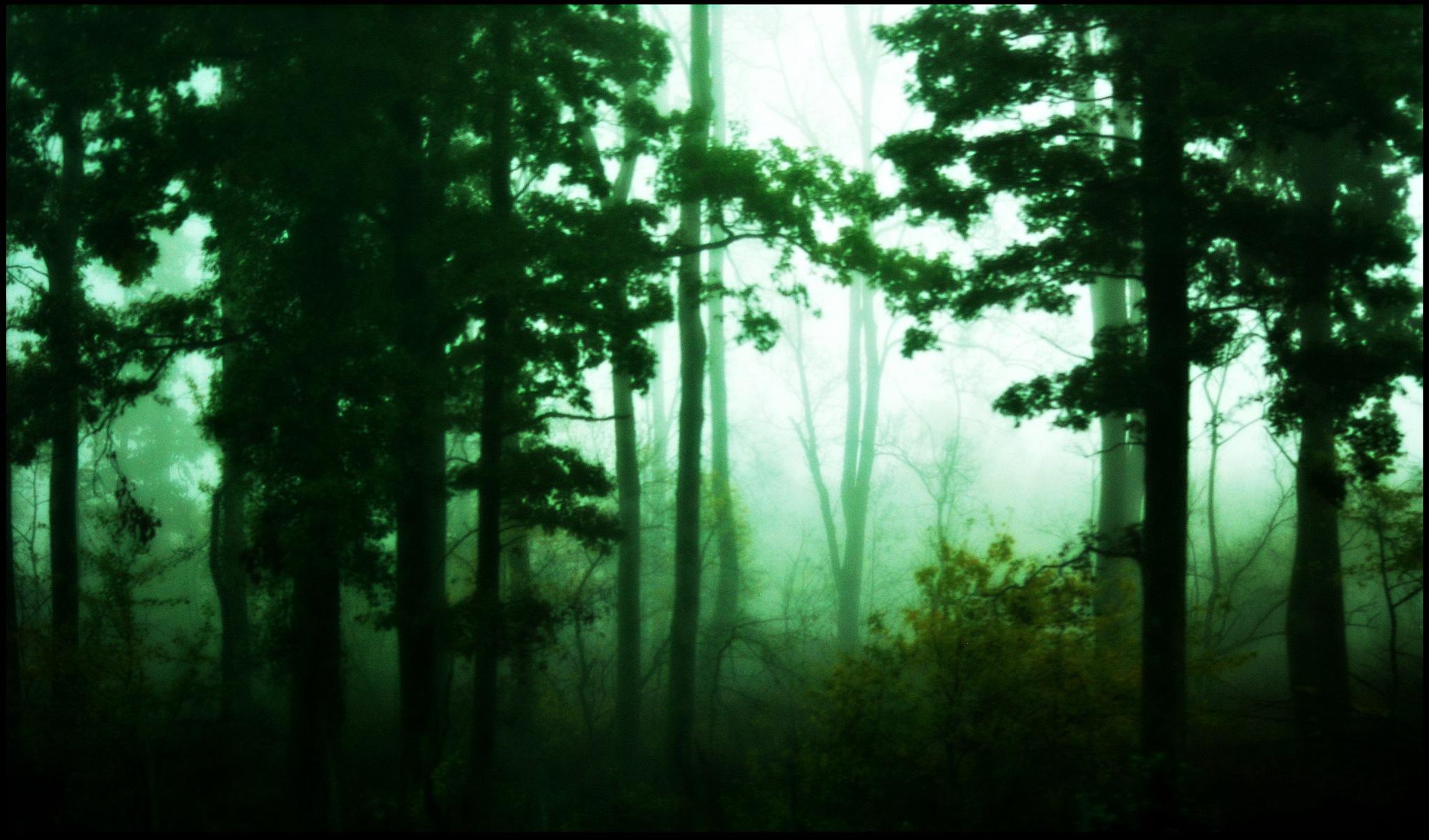 in the wood by Marija Petrovic