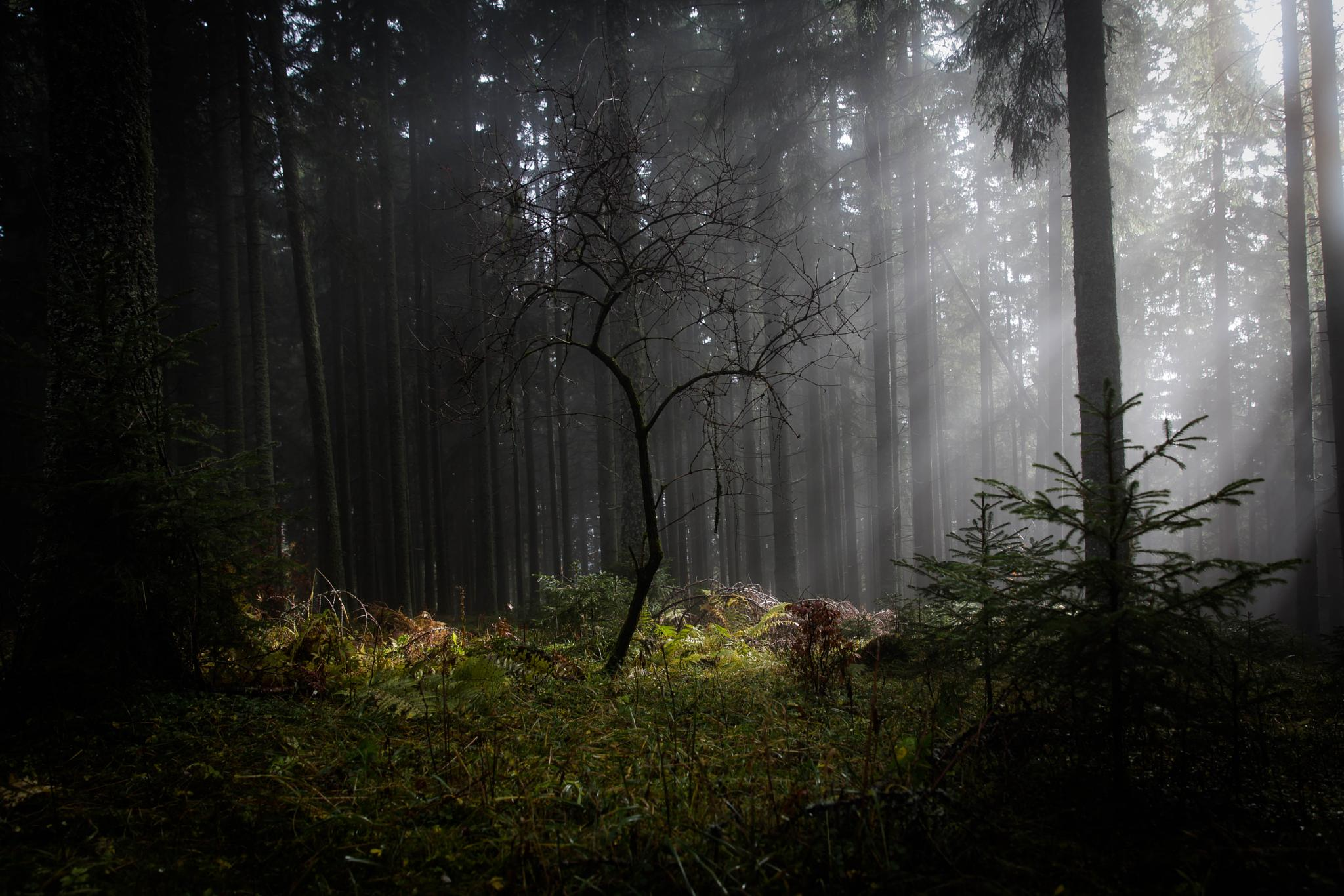 the magic in the woods by Martin Kriebernegg