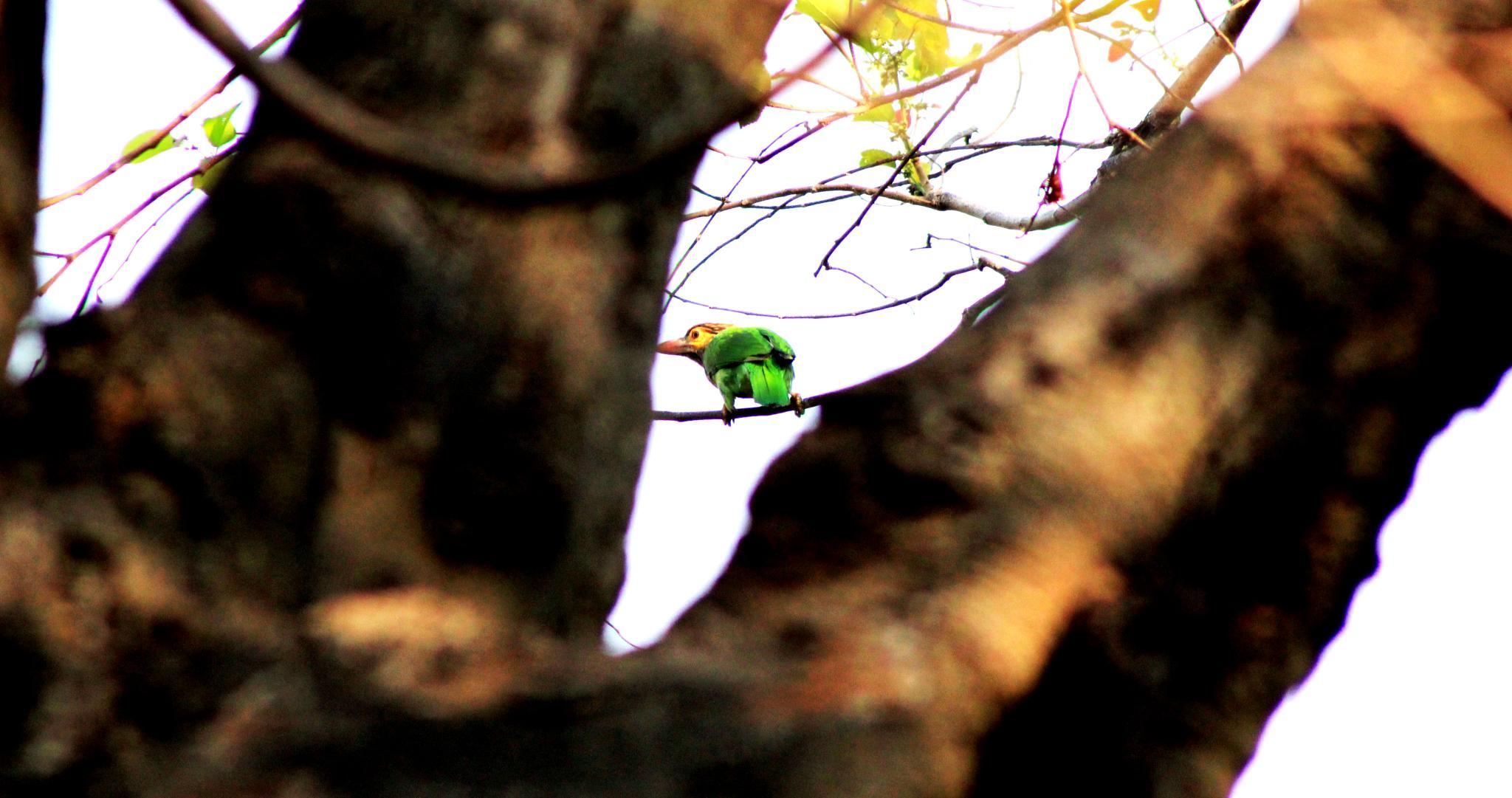 Untitled by Gee Iyappan
