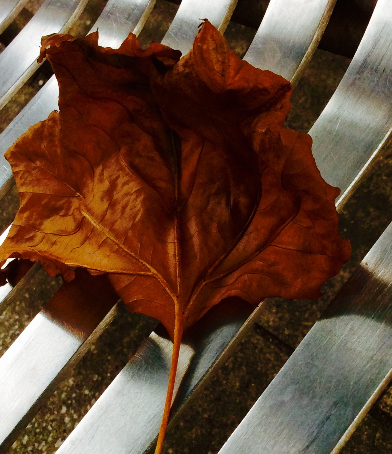 Leaf on a seat by simie