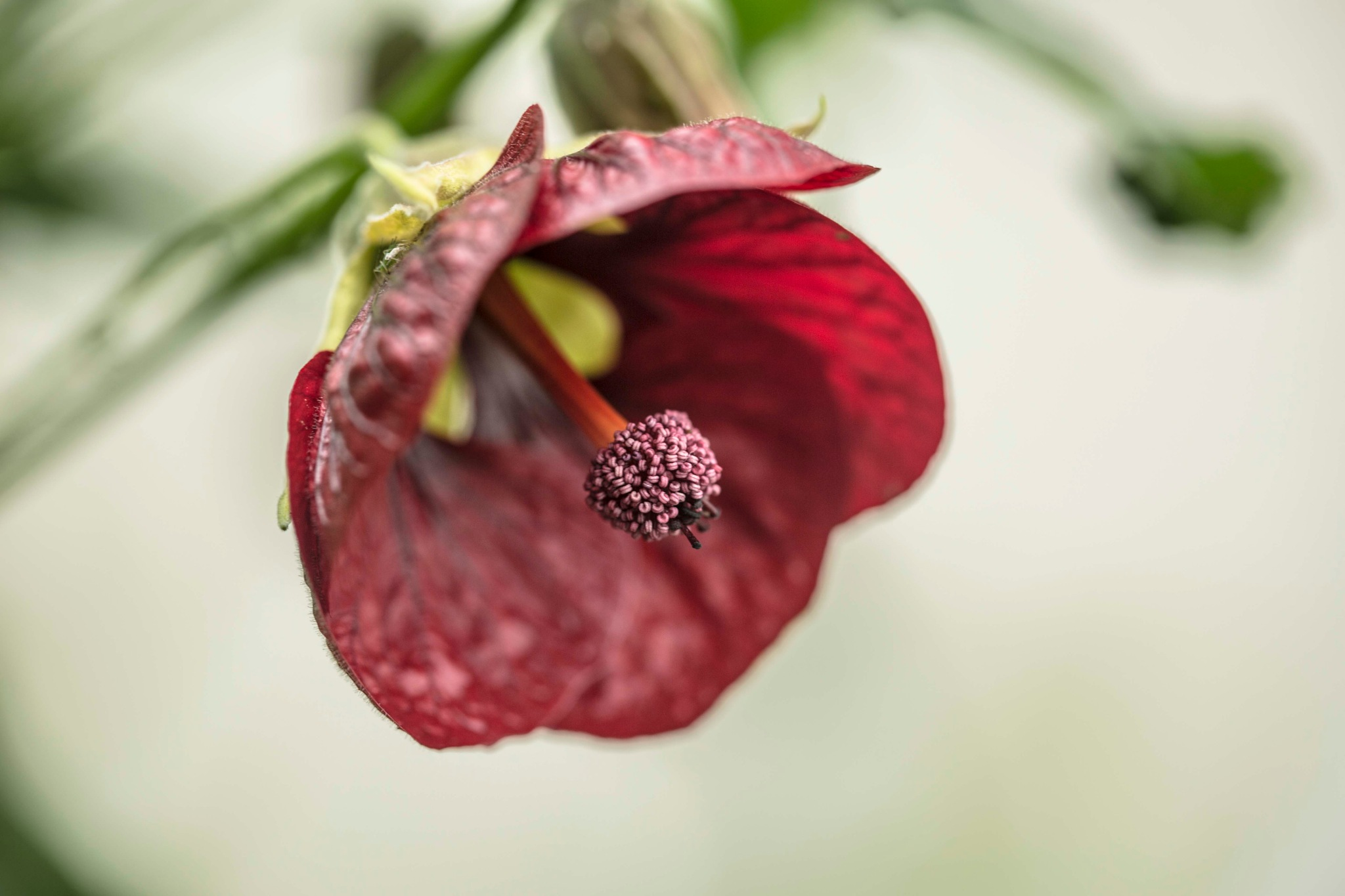 Sheffield Botanical Garden Flower by simie