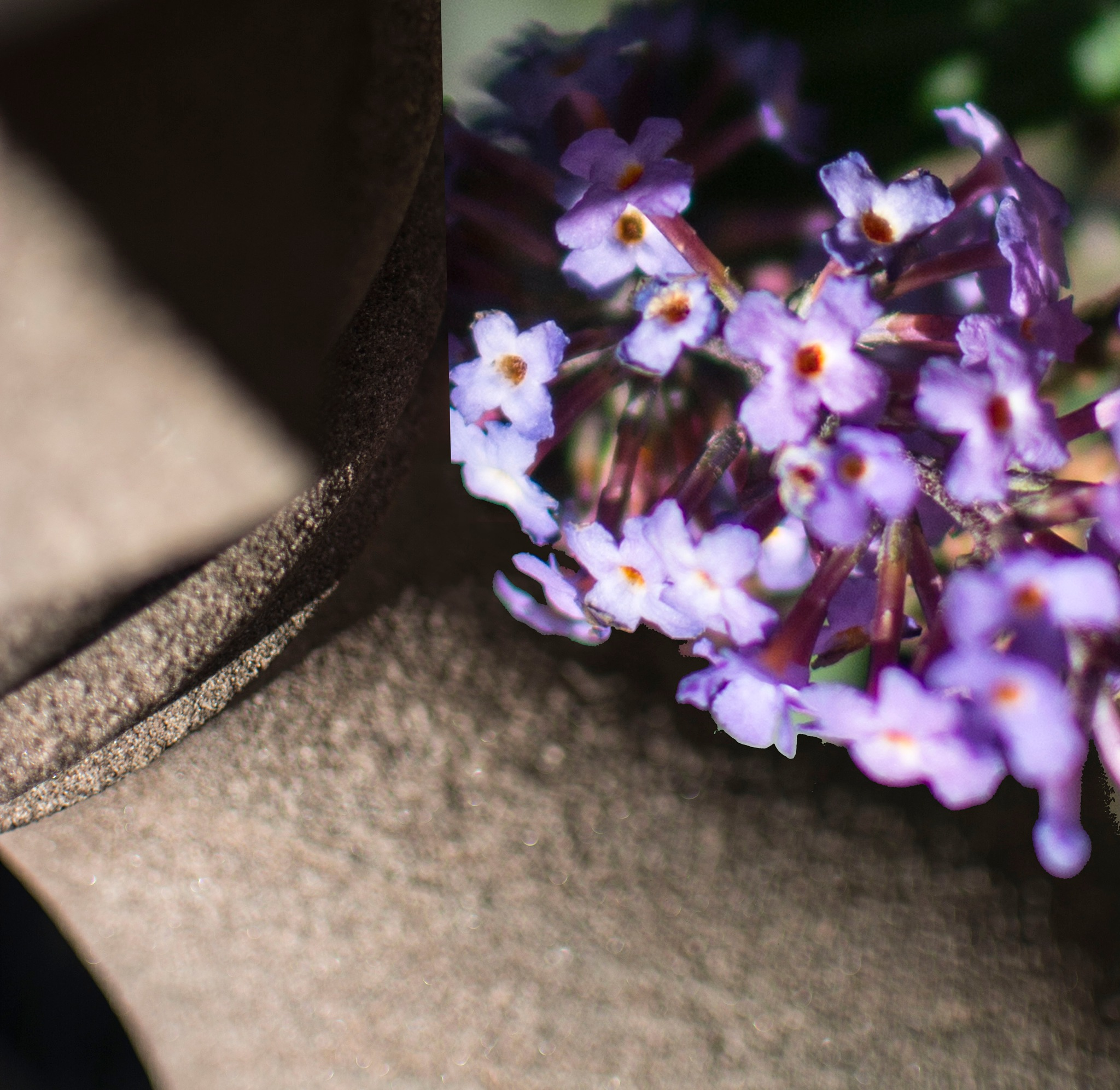 Tiny flowers poking through by simie