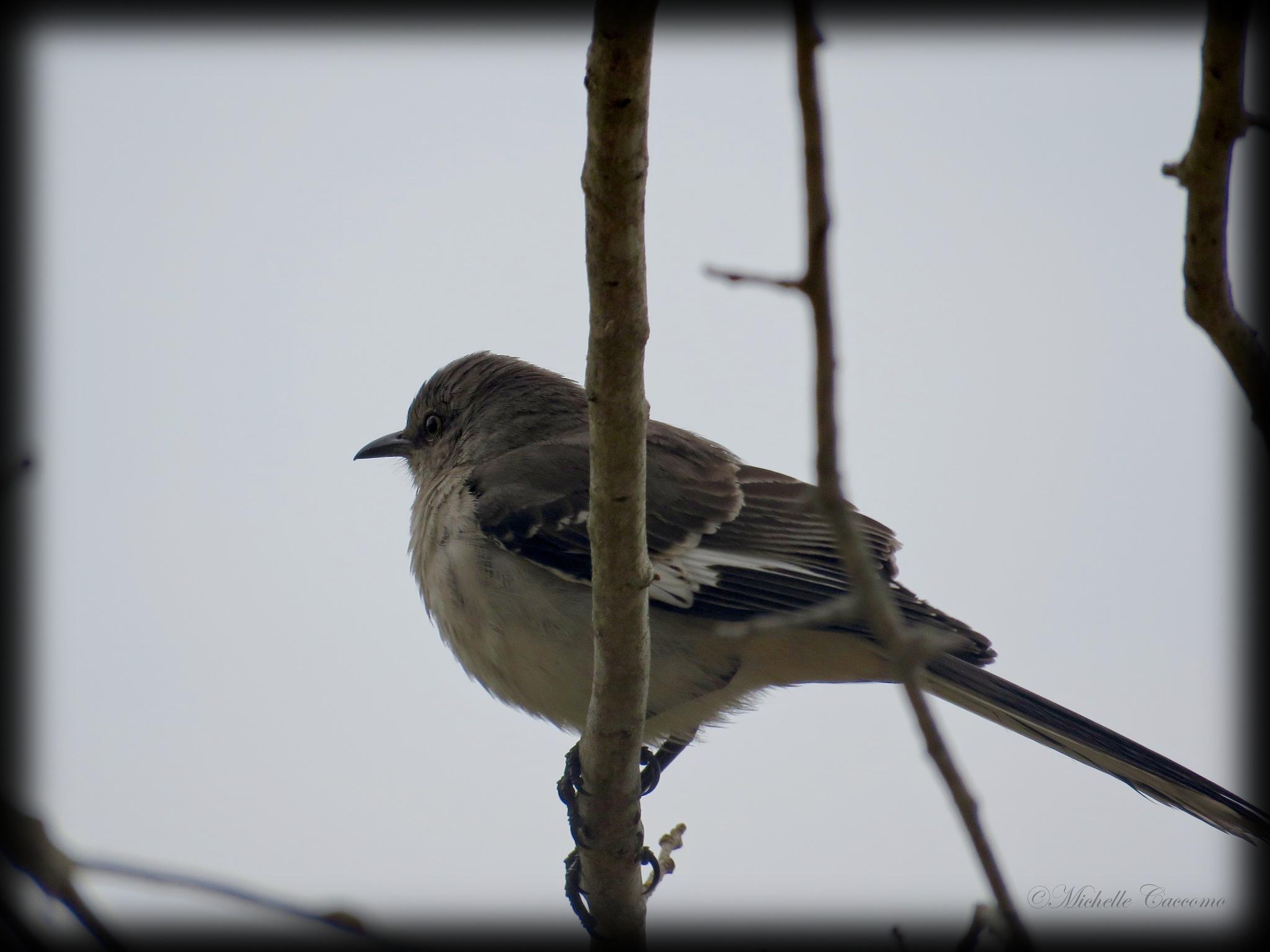 Sweet Little Bird by Michelle Caccomo